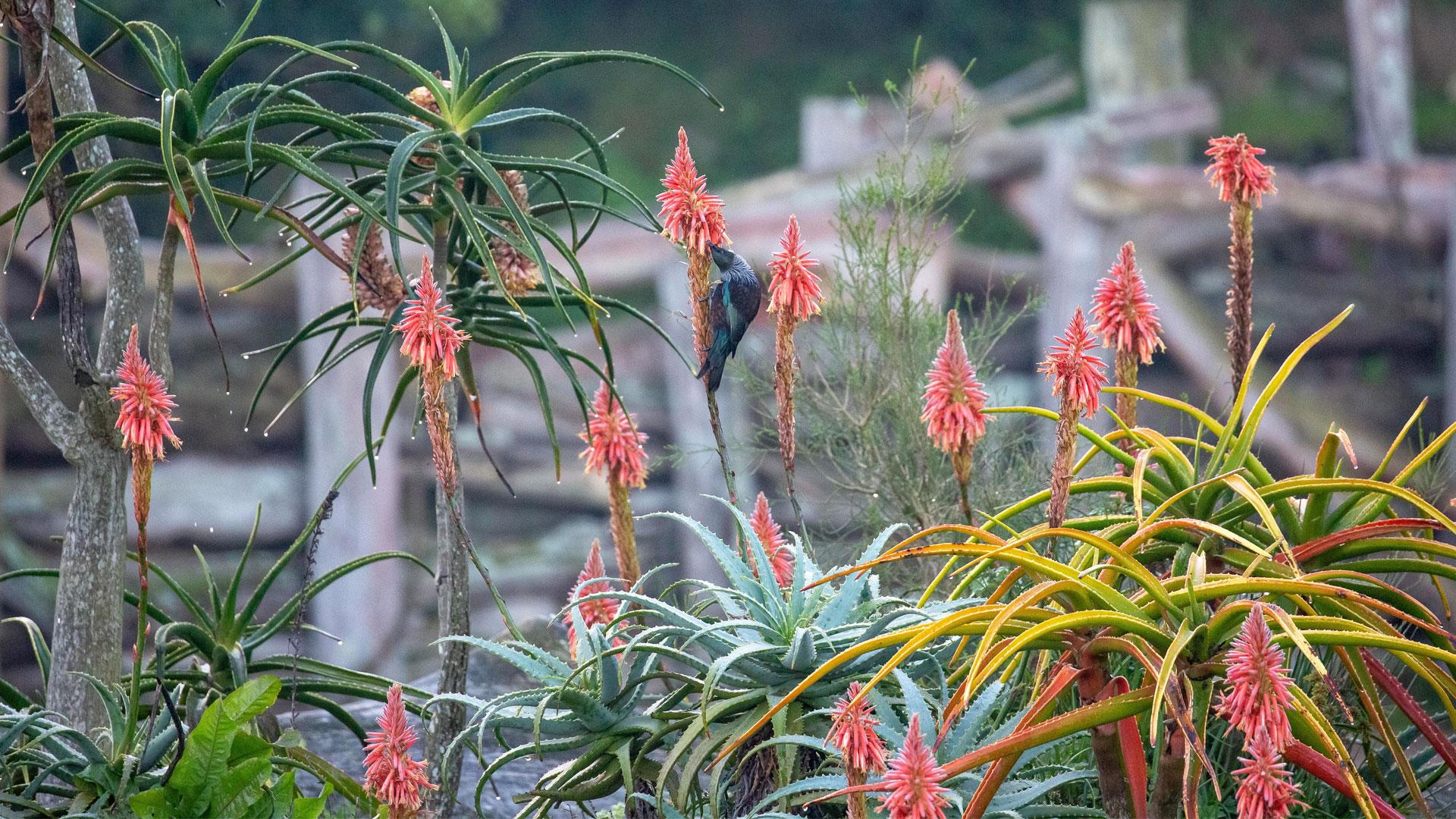 https://rfacdn.nz/zoo/assets/media/horticulture-blog-aloe-gallery-9.jpg