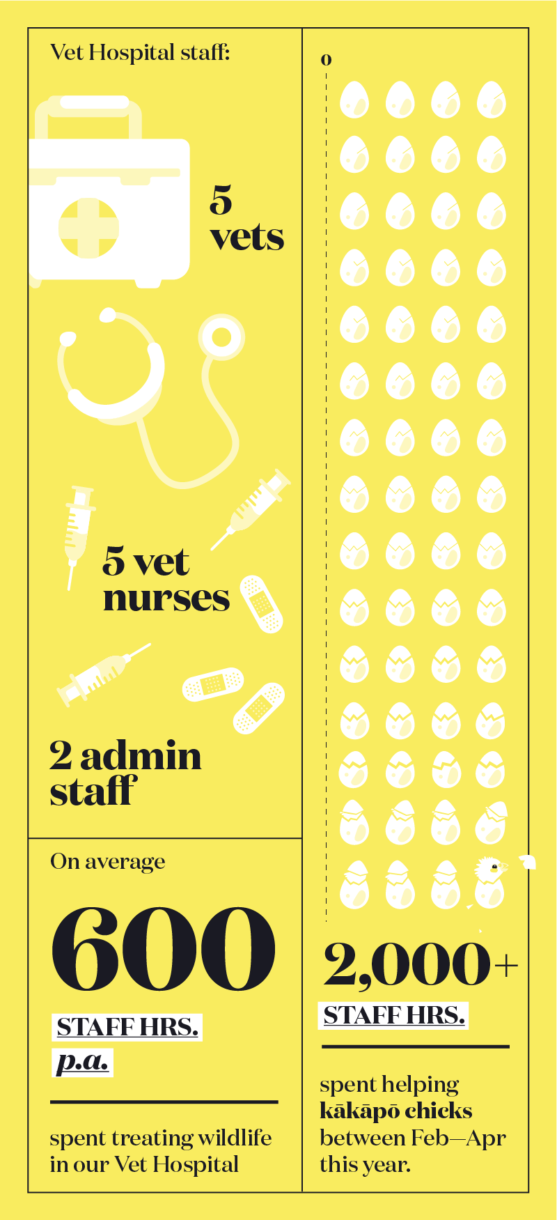 https://rfacdn.nz/zoo/assets/media/infographic-vet-hospital.png