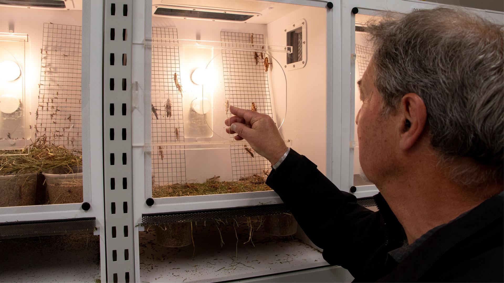 https://rfacdn.nz/zoo/assets/media/insect-portacom-gallery-1.jpg