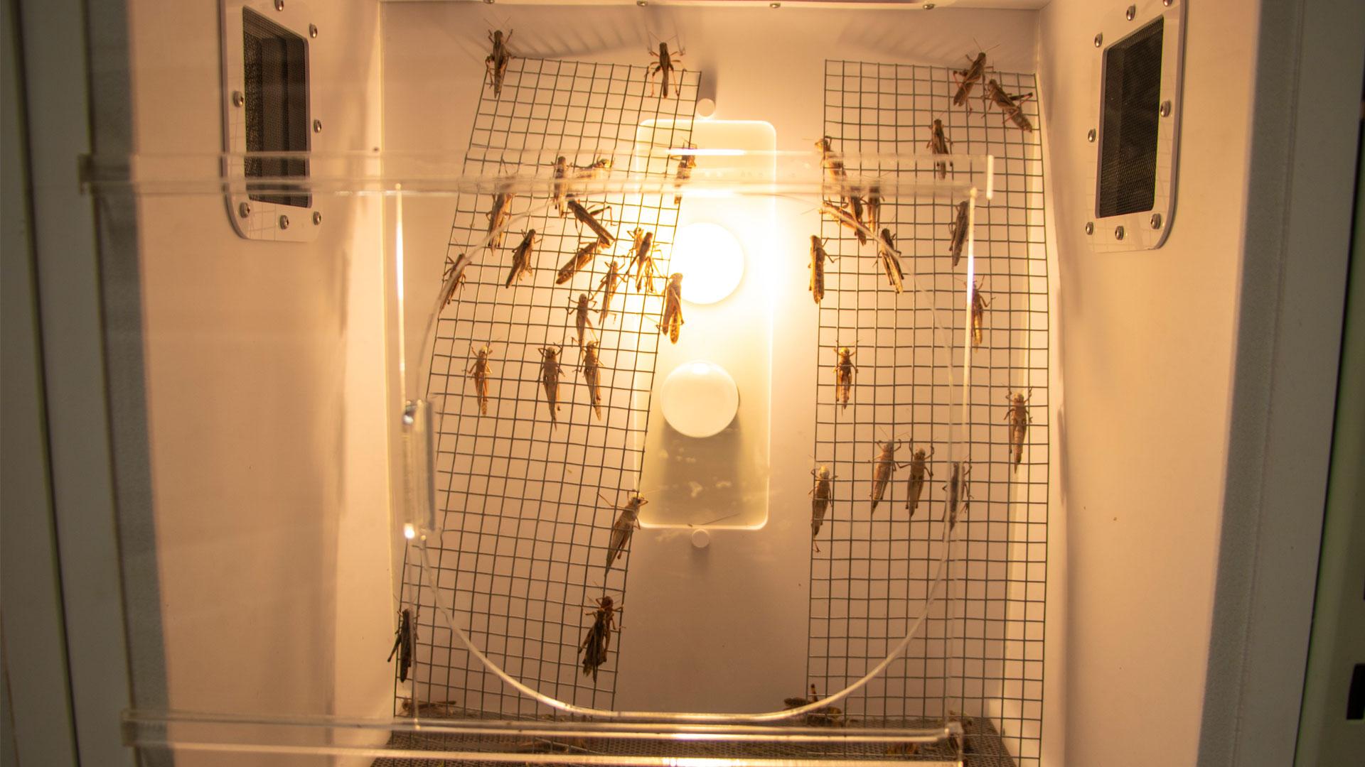 https://rfacdn.nz/zoo/assets/media/insect-portacom-gallery-10.jpg