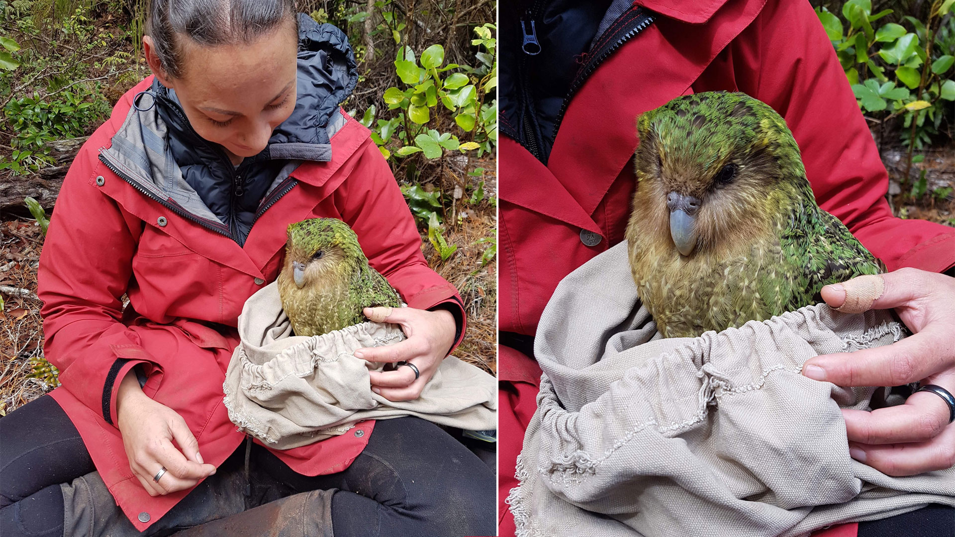 https://rfacdn.nz/zoo/assets/media/jasmine-with-kakapo-gallery-1.jpg