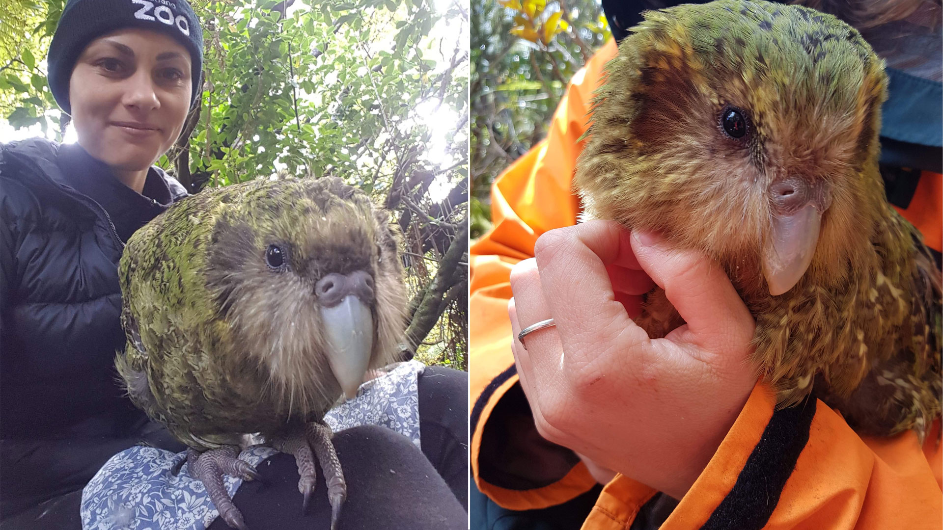https://rfacdn.nz/zoo/assets/media/jasmine-with-kakapo-gallery-4.jpg