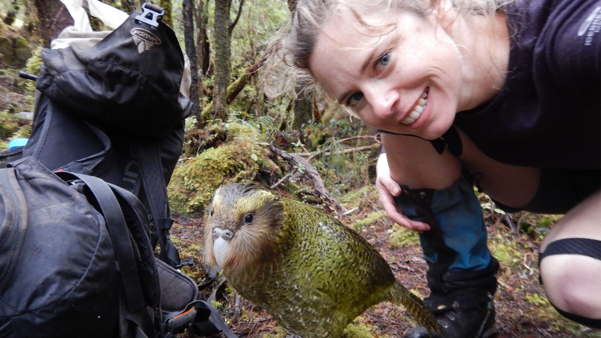 https://rfacdn.nz/zoo/assets/media/juvenile-kakapo-on-off.png