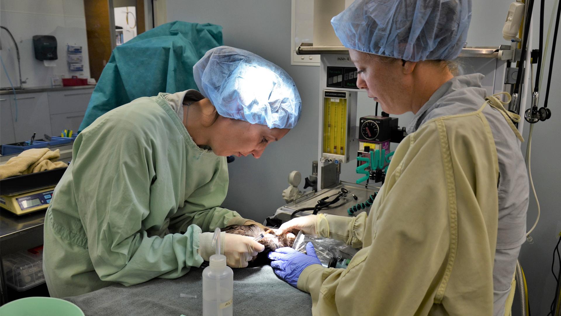https://rfacdn.nz/zoo/assets/media/kaka-vet-hospital-gallery-1.jpg