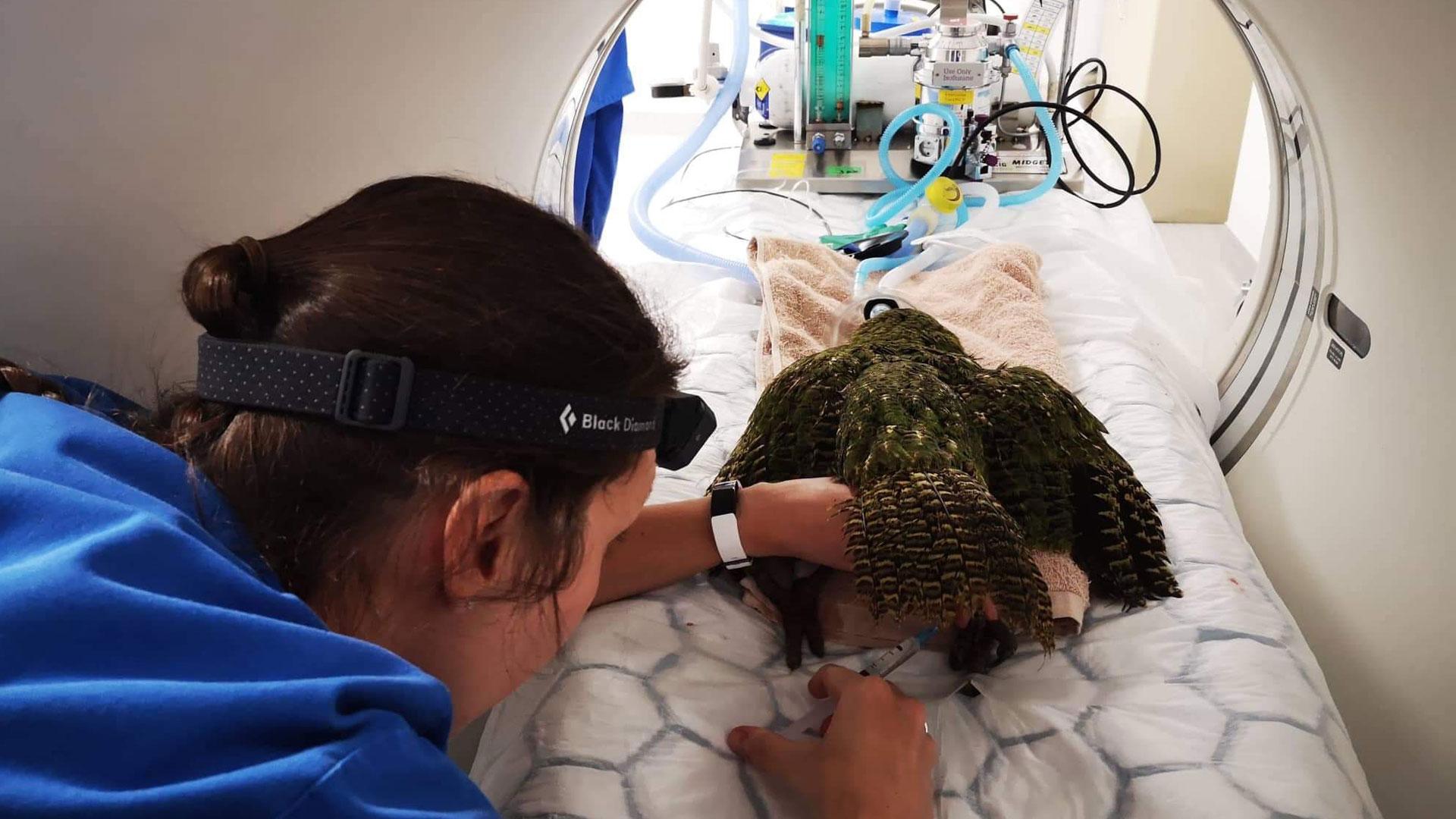 https://rfacdn.nz/zoo/assets/media/kakapo-gallery-4.jpg