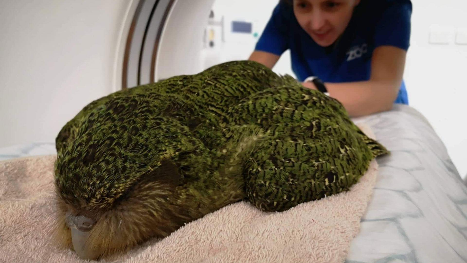 https://rfacdn.nz/zoo/assets/media/kakapo-gallery-5.jpg
