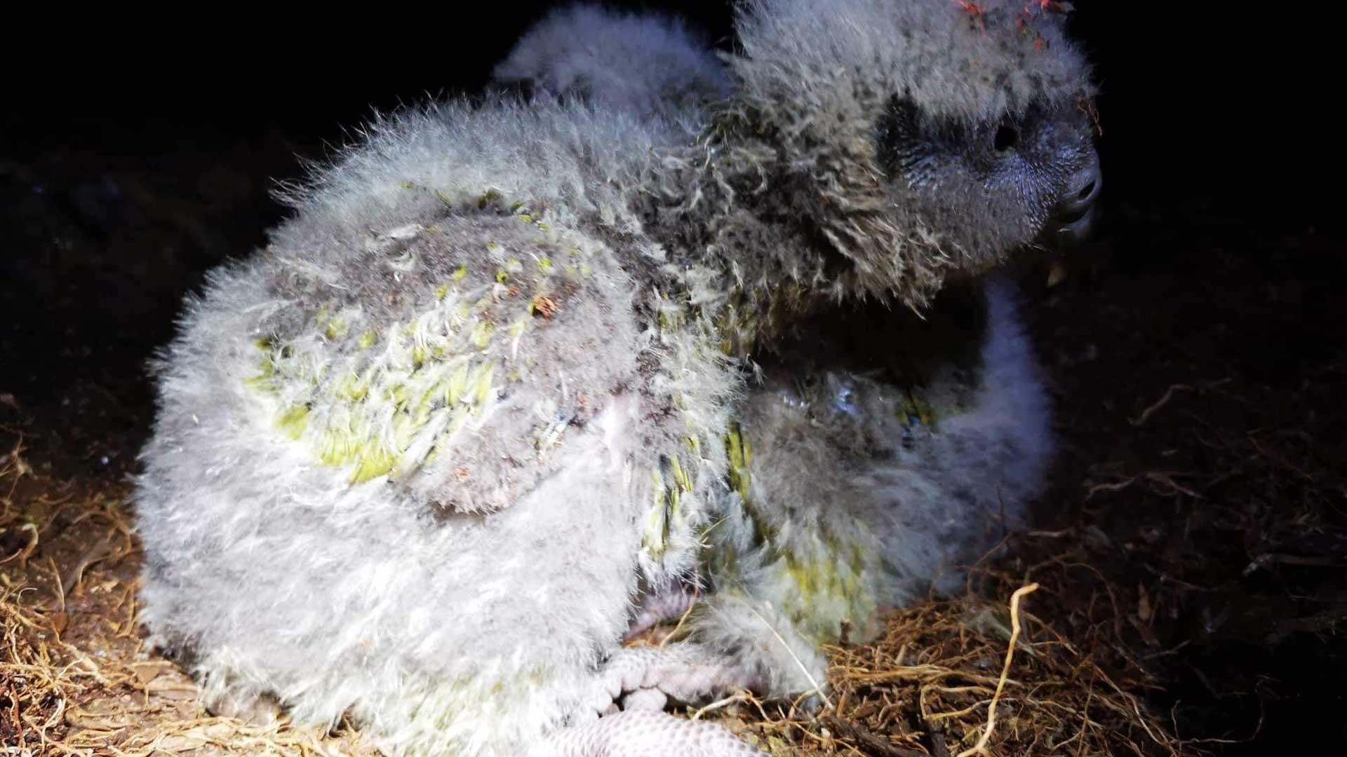 https://rfacdn.nz/zoo/assets/media/kakapo-hinemoa-gallery-10.jpg