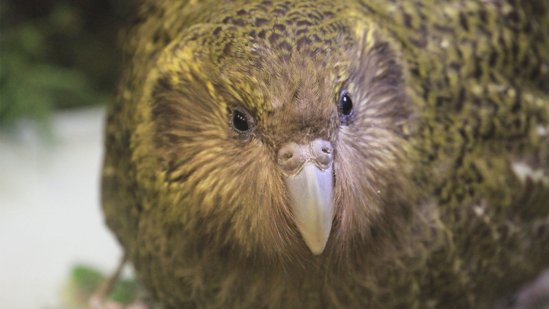 https://rfacdn.nz/zoo/assets/media/kakapo-komaru-kids-gallery-3.jpg