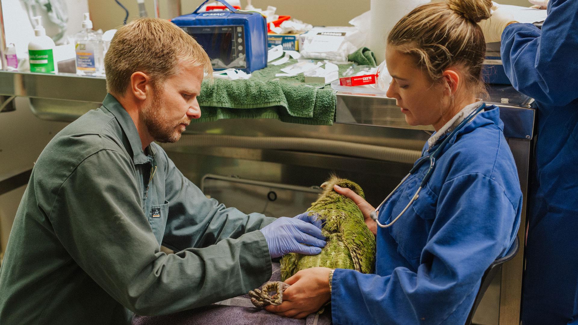https://rfacdn.nz/zoo/assets/media/kakapo-vet-hospital-bravo-gallery-1.jpg