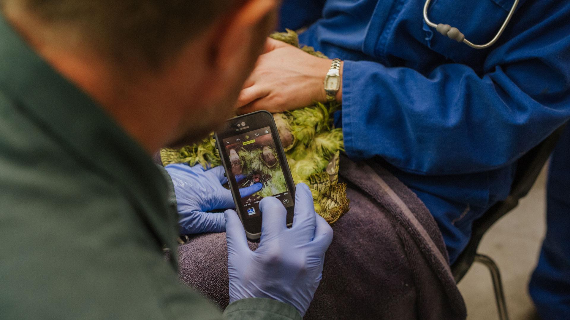 https://rfacdn.nz/zoo/assets/media/kakapo-vet-hospital-bravo-gallery-4.jpg