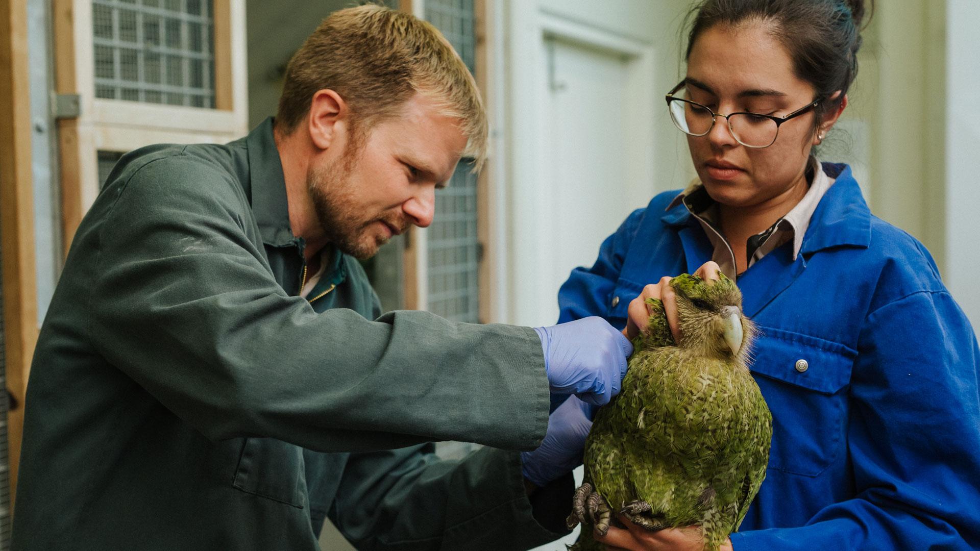 https://rfacdn.nz/zoo/assets/media/kakapo-vet-hospital-bravo-gallery-5.jpg