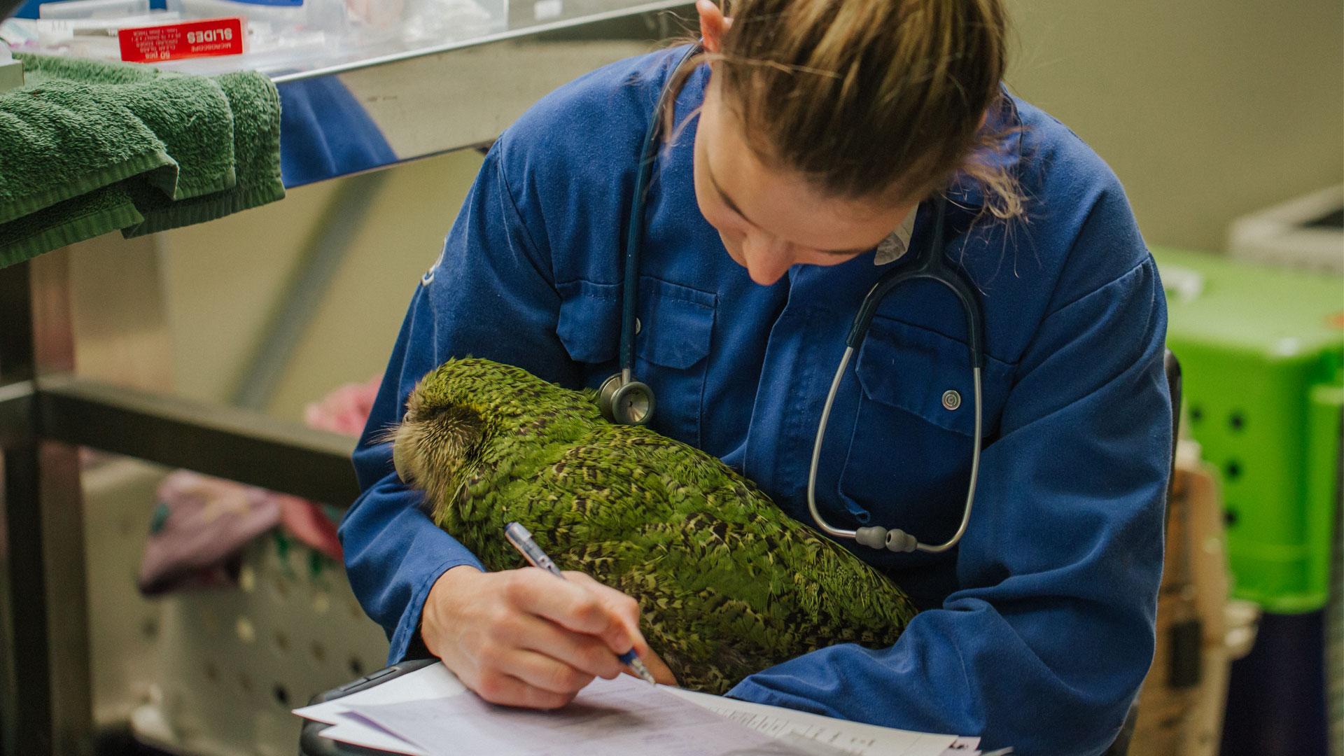 https://rfacdn.nz/zoo/assets/media/kakapo-vet-hospital-bravo-gallery-6.jpg