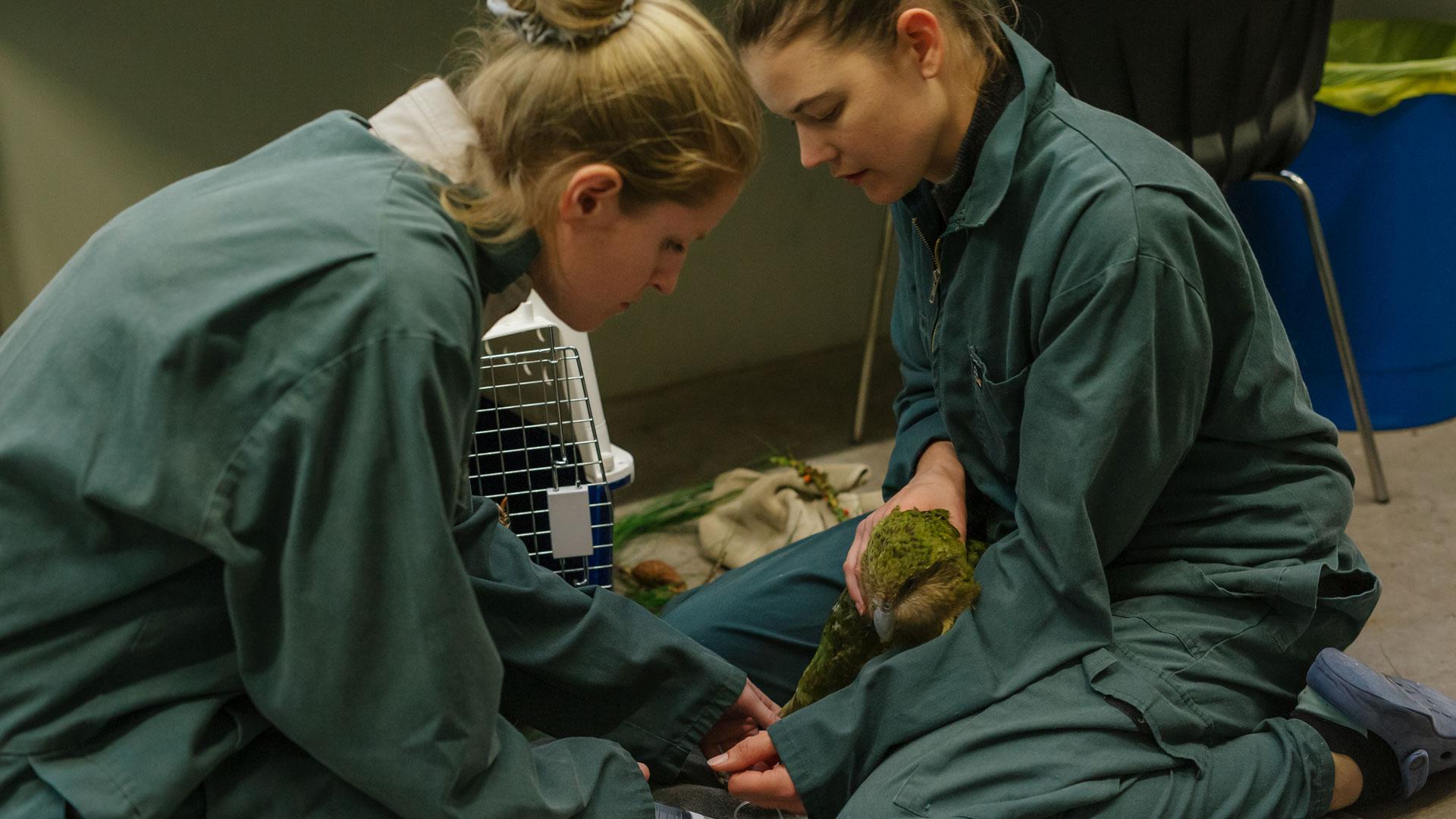 https://rfacdn.nz/zoo/assets/media/kakapo-vet-hospital-hinemoa-gallery-1.jpg
