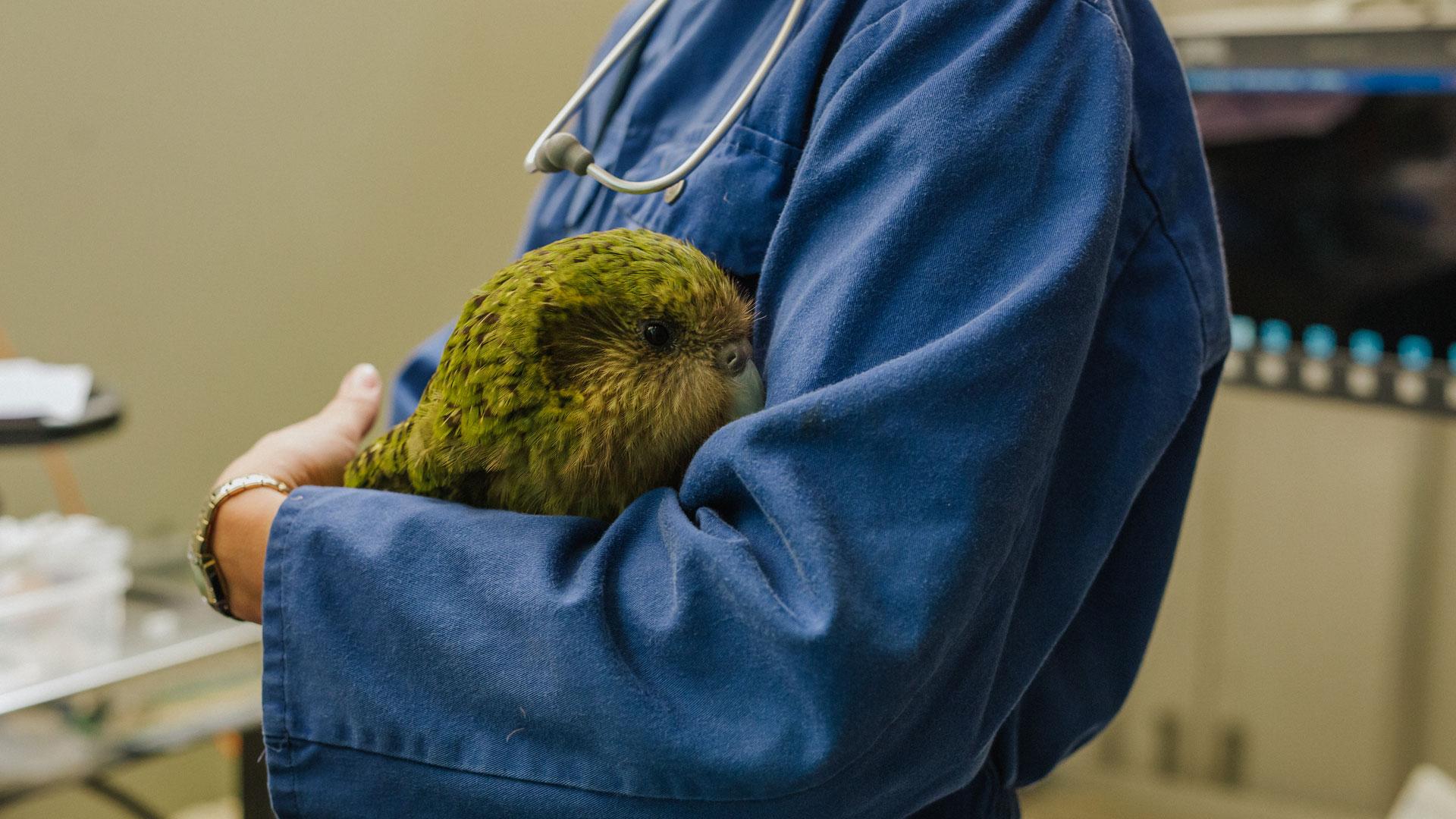 https://rfacdn.nz/zoo/assets/media/kakapo-vet-hospital-huhu-gallery-3.jpg
