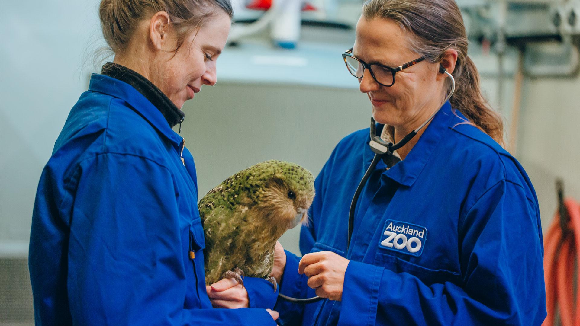 https://rfacdn.nz/zoo/assets/media/kakapo-vori-gallery-3.jpg
