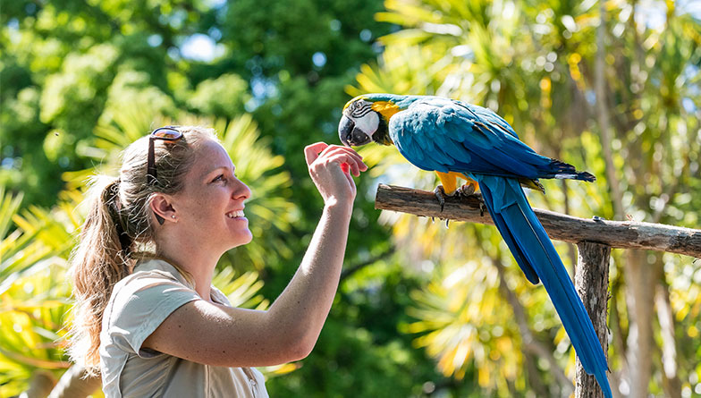 https://rfacdn.nz/zoo/assets/media/keeper-macaw-rectangle.jpg