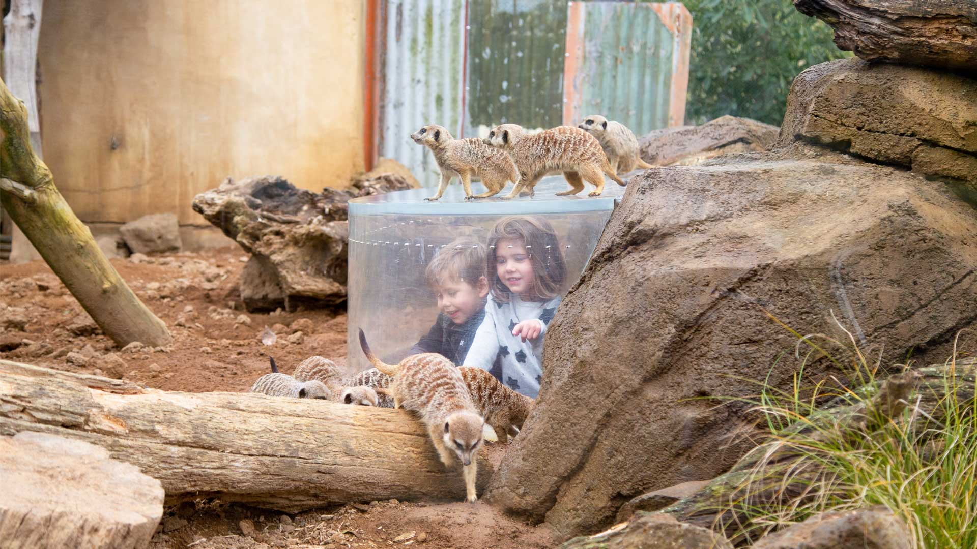 https://rfacdn.nz/zoo/assets/media/kids-meerkats-gallery-1.jpg