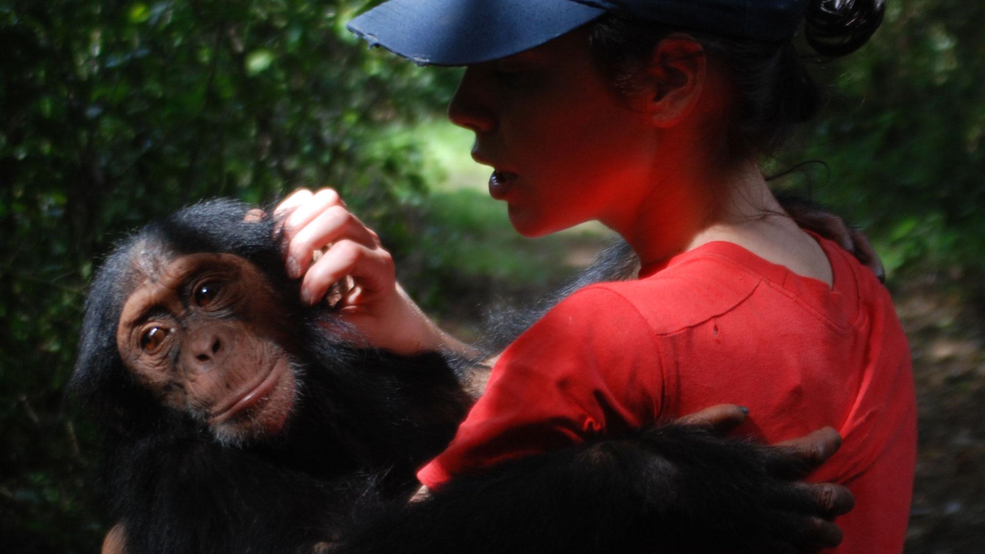 https://rfacdn.nz/zoo/assets/media/mikaylie-chimp-congo-gallery-1.jpg