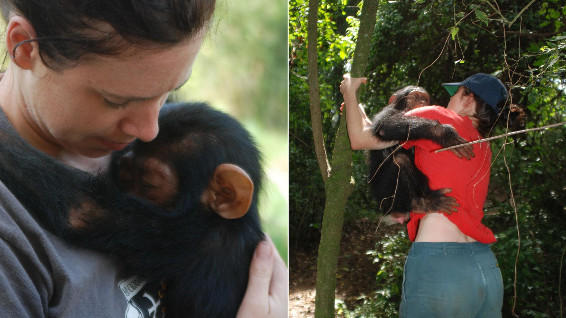 https://rfacdn.nz/zoo/assets/media/mikaylie-chimp-congo-gallery-2.jpg