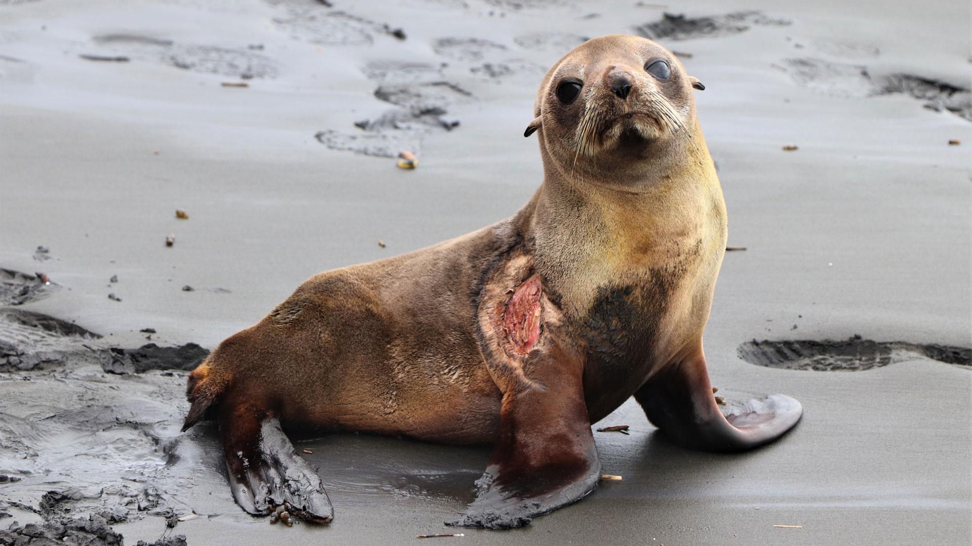 https://rfacdn.nz/zoo/assets/media/nz-fur-seal-gallery-2.jpg