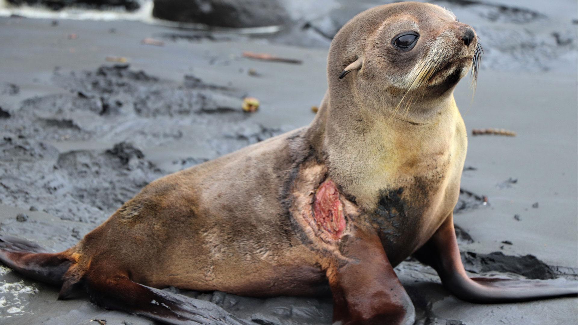 https://rfacdn.nz/zoo/assets/media/nz-fur-seal-gallery-3.jpg