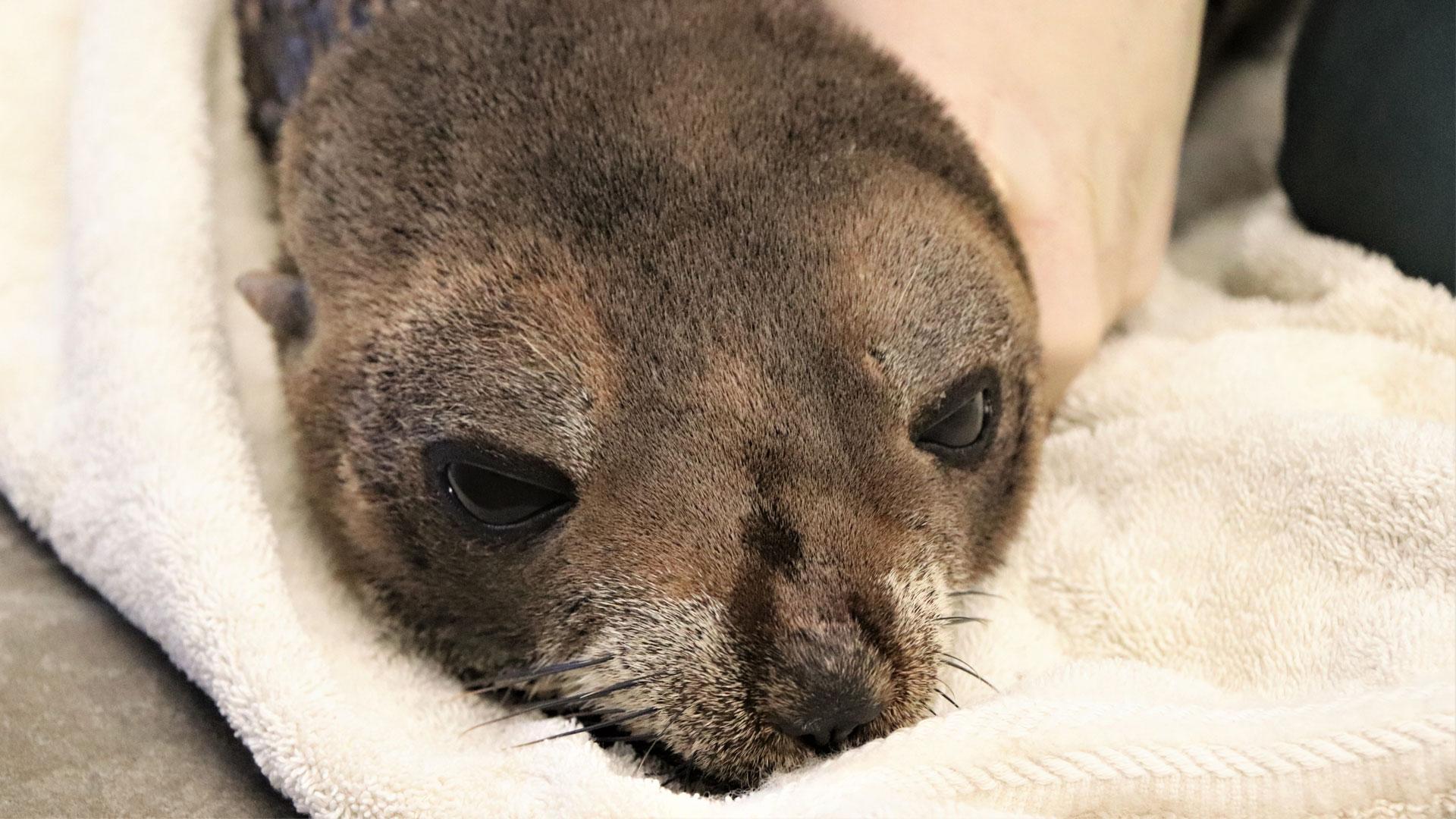 https://rfacdn.nz/zoo/assets/media/nz-fur-seal-gallery-4.jpg
