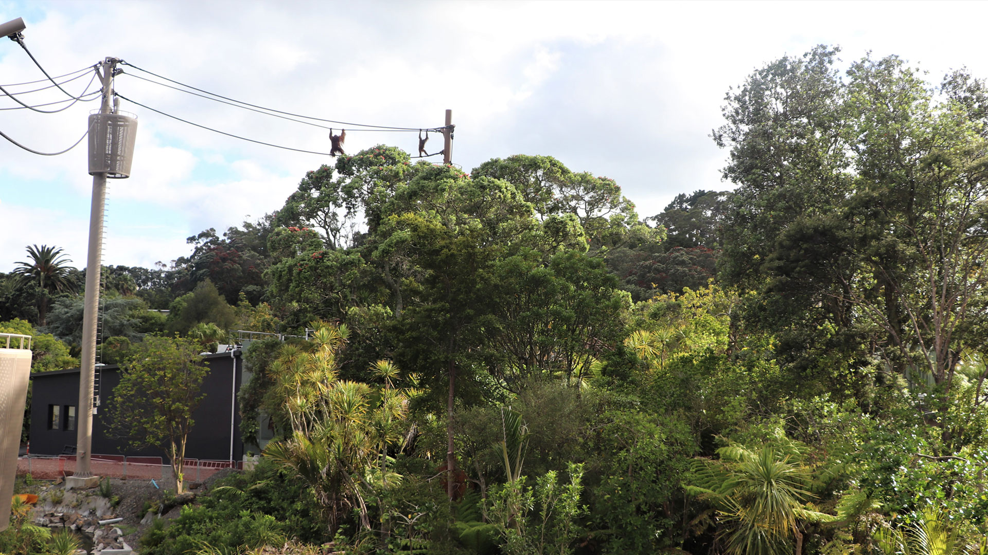 https://rfacdn.nz/zoo/assets/media/orangutans-aerial-pathways-gallery-2.jpg