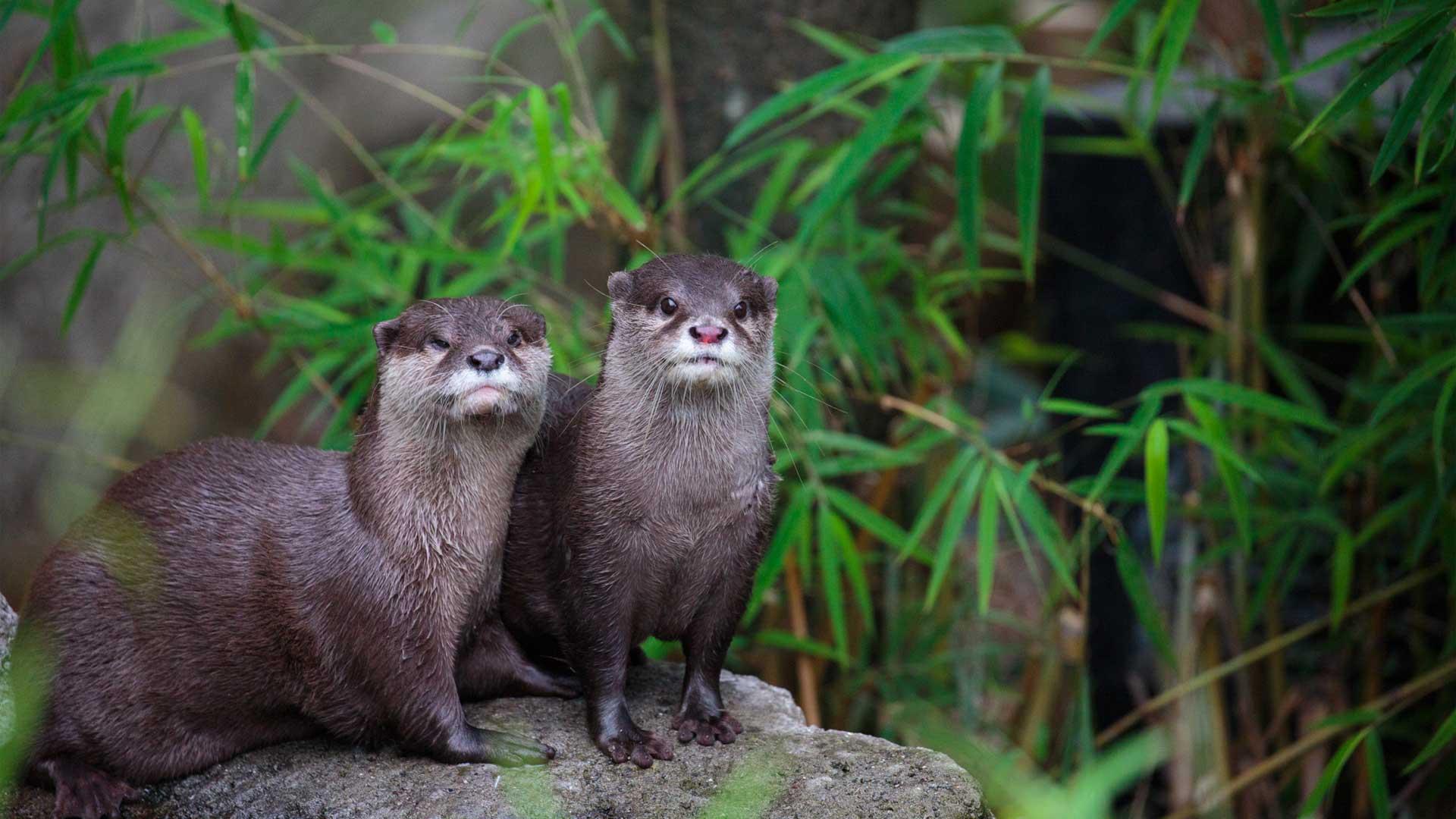 https://rfacdn.nz/zoo/assets/media/otter-gallery-1.jpg