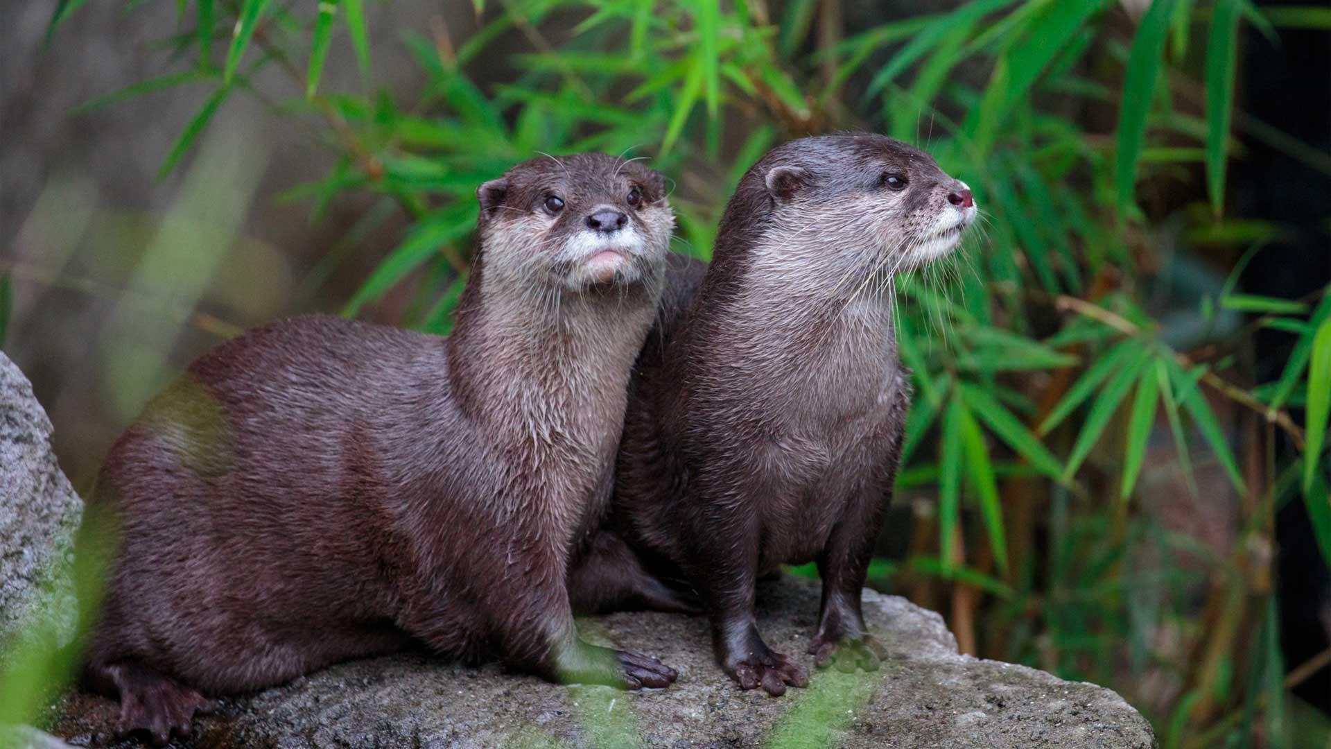 https://rfacdn.nz/zoo/assets/media/otter-gallery-2.jpg