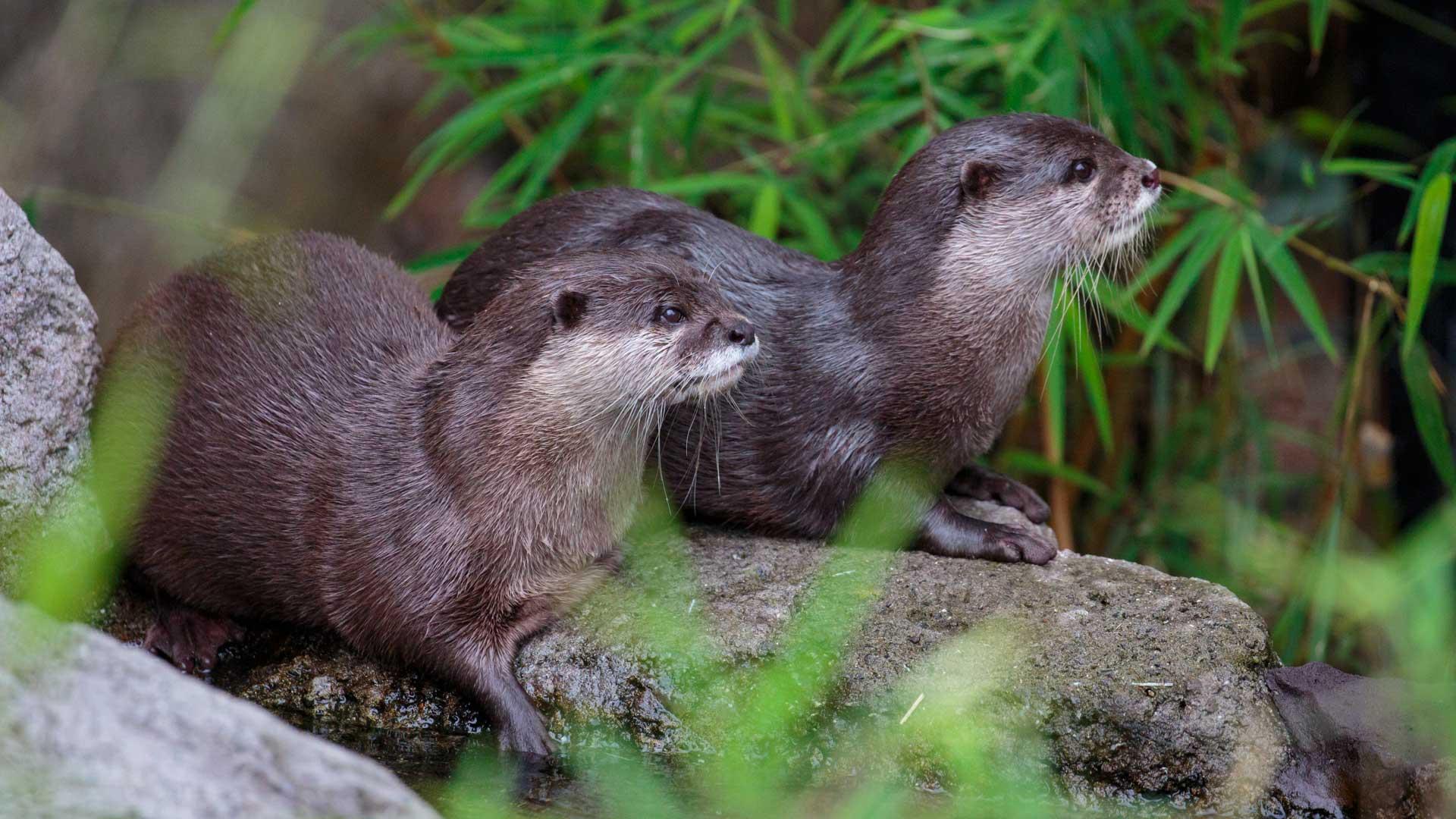 https://rfacdn.nz/zoo/assets/media/otter-gallery-3.jpg