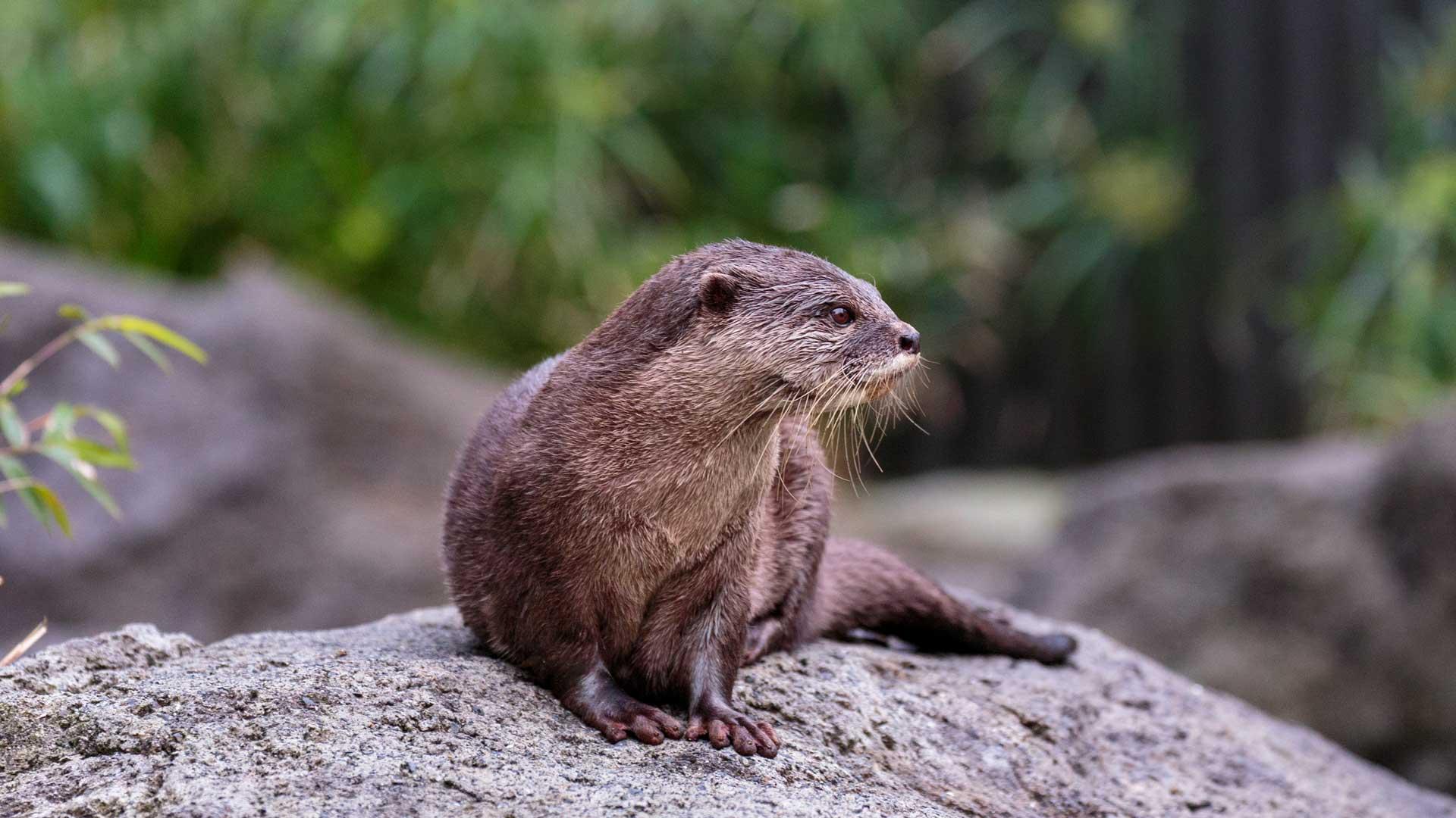 https://rfacdn.nz/zoo/assets/media/otter-gallery-4.jpg