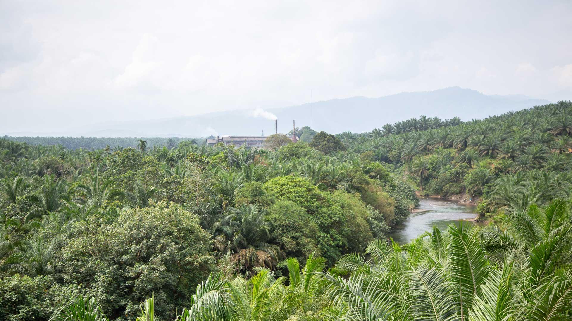 https://rfacdn.nz/zoo/assets/media/palm-oil-sumatra-gallery-10.jpg