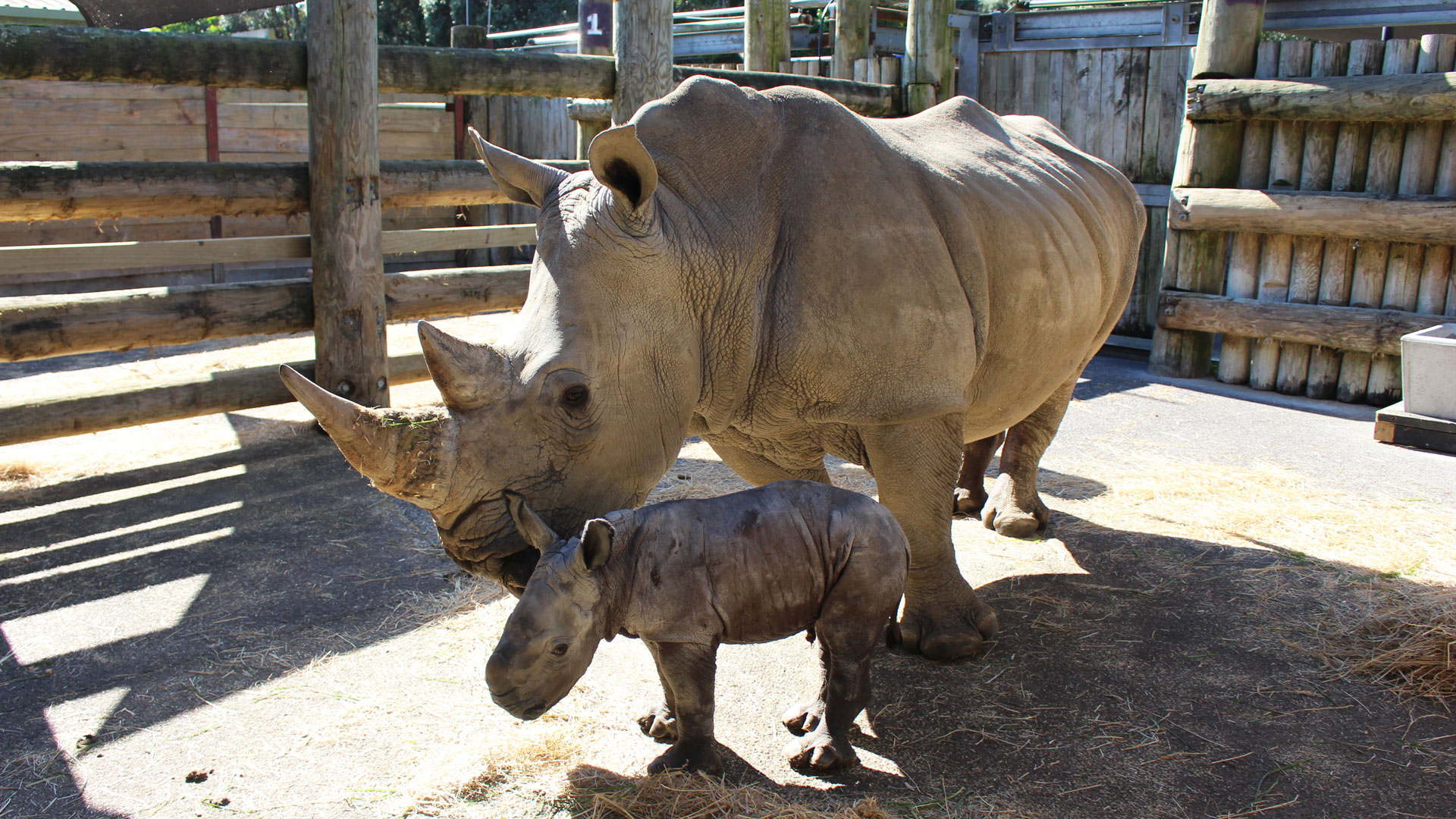 https://rfacdn.nz/zoo/assets/media/rhino-calf-gallery-1.jpg