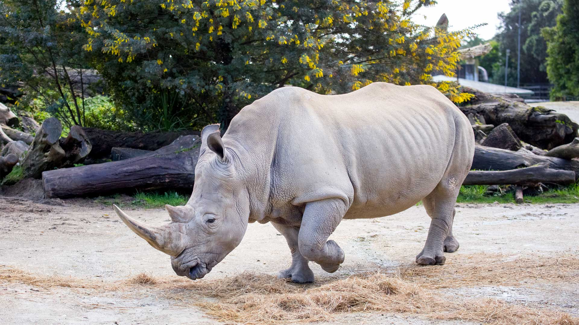 https://rfacdn.nz/zoo/assets/media/rhino-gallery-1.jpg