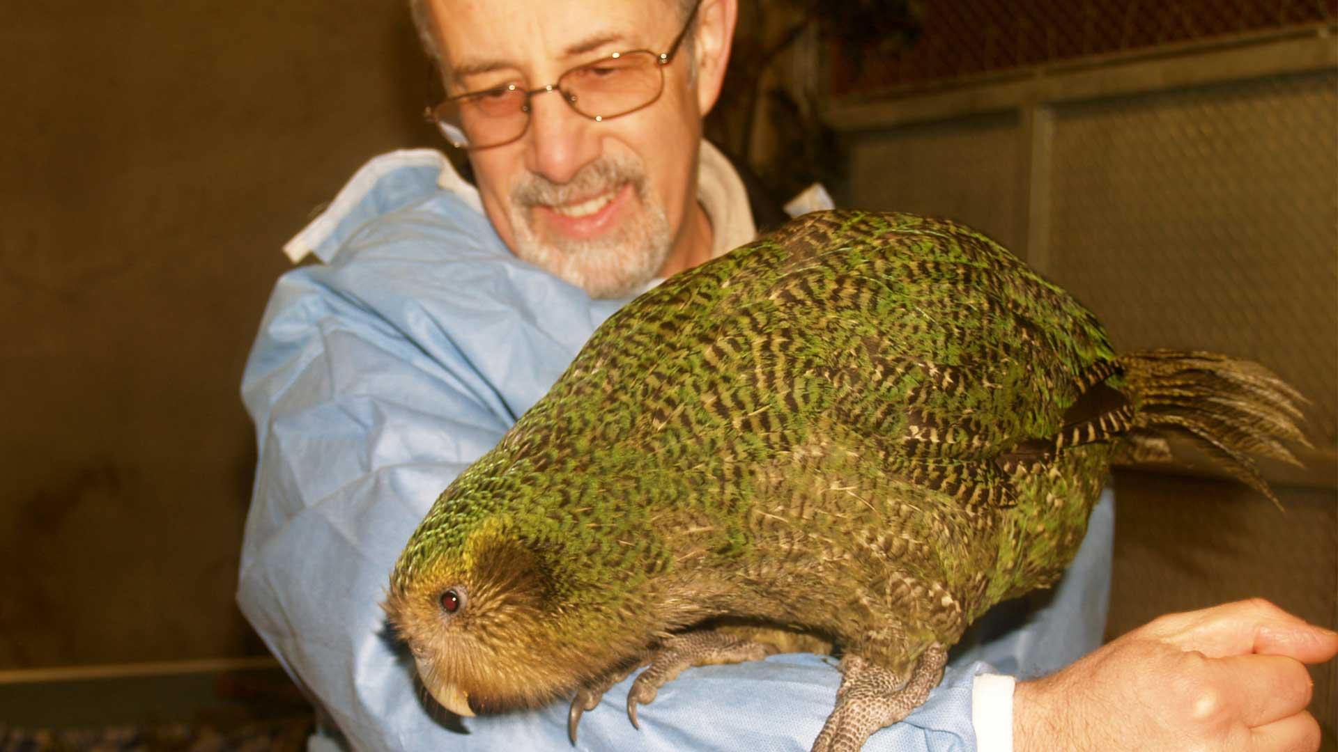 https://rfacdn.nz/zoo/assets/media/richard-kakapo-gallery-1.jpg