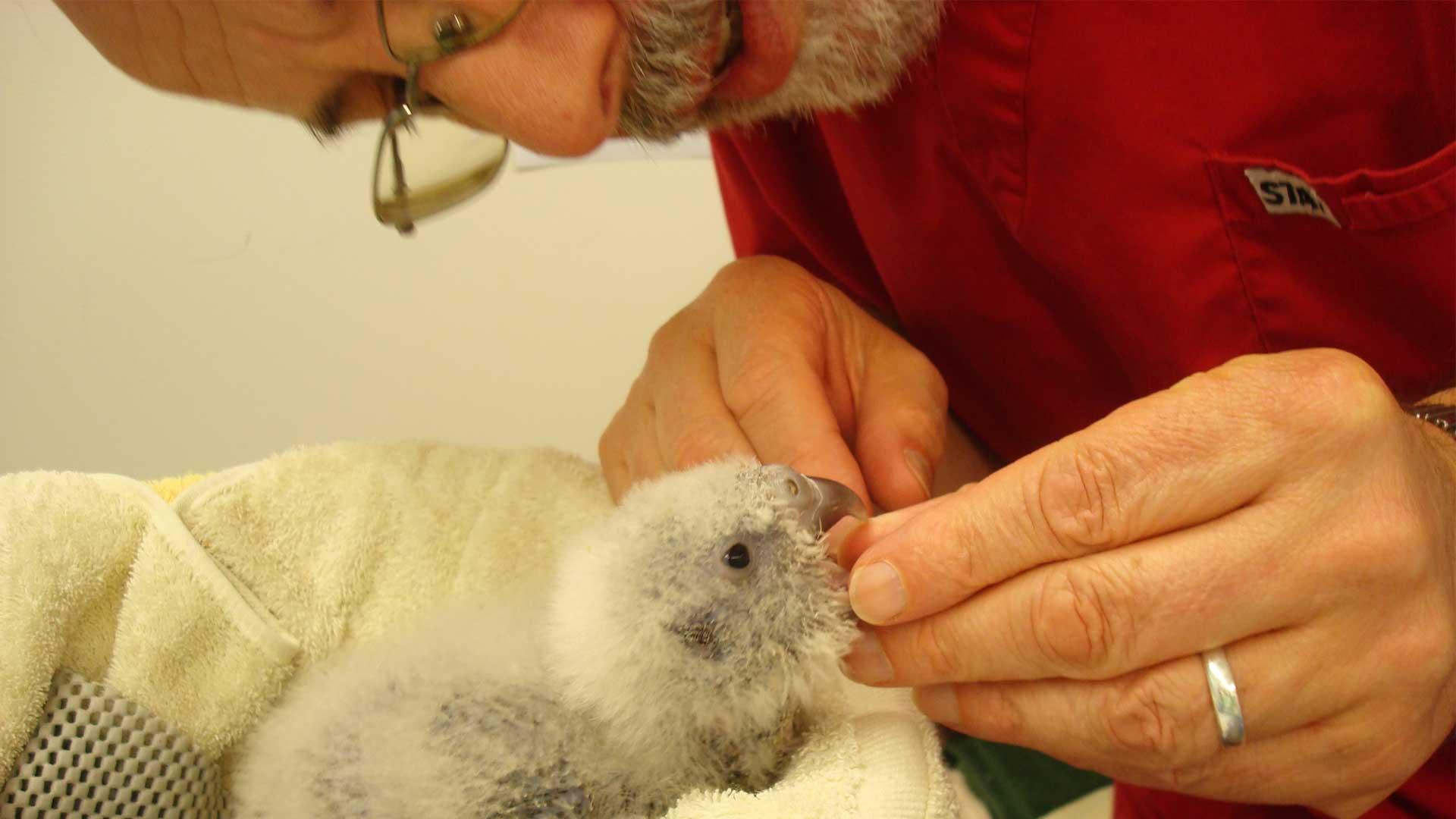 https://rfacdn.nz/zoo/assets/media/richard-kakapo-gallery-2.jpg