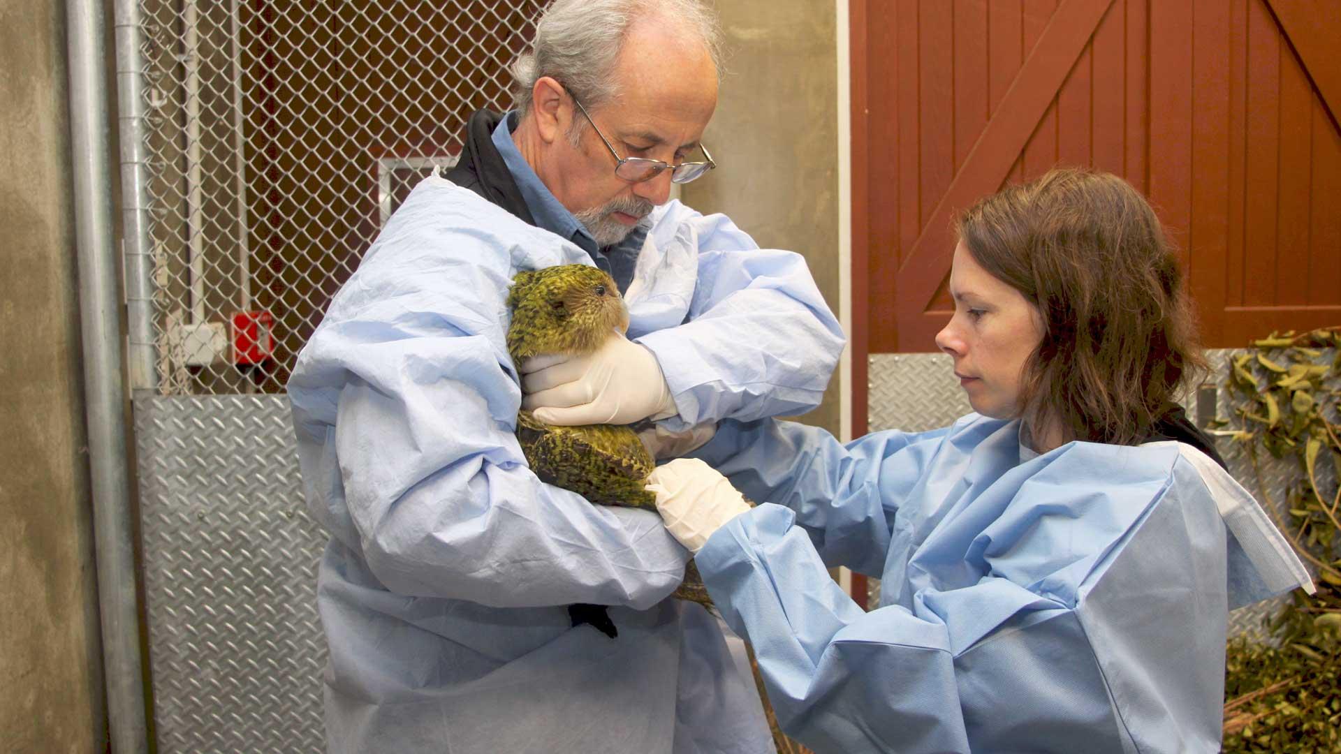https://rfacdn.nz/zoo/assets/media/richard-kakapo-gallery-3.jpg