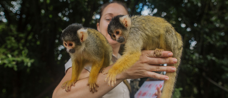 https://rfacdn.nz/zoo/assets/media/sam-squirrel-monkeys.jpg