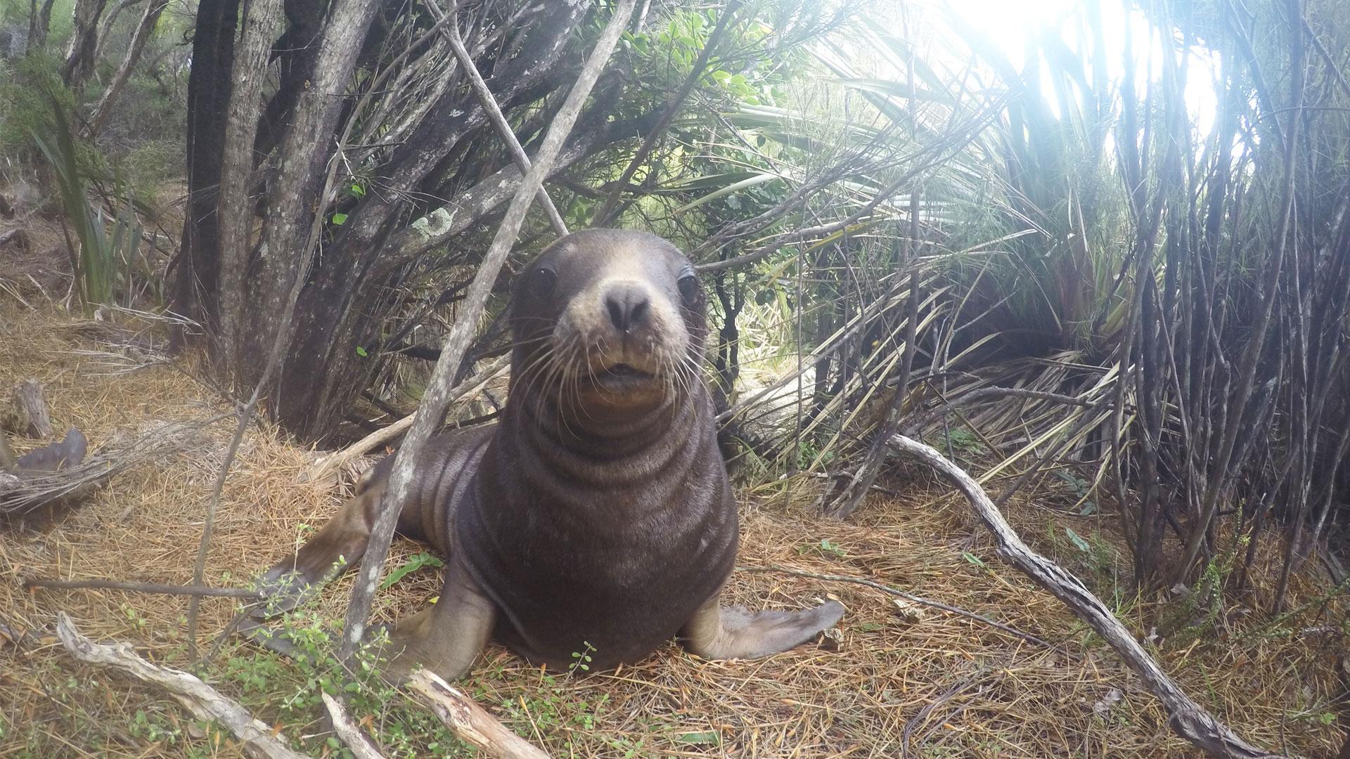 https://rfacdn.nz/zoo/assets/media/sea-lion-conservation-gallery-1.jpg