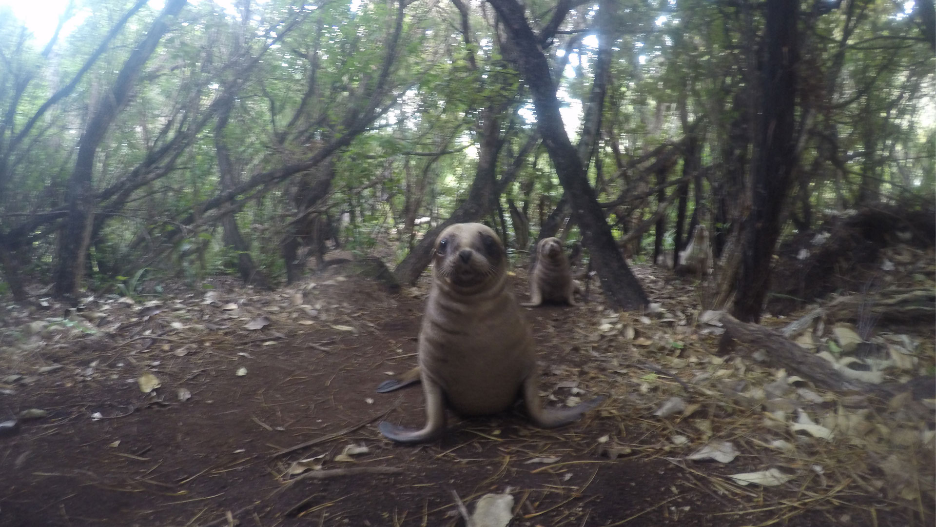 https://rfacdn.nz/zoo/assets/media/sea-lion-conservation-gallery-3.jpg
