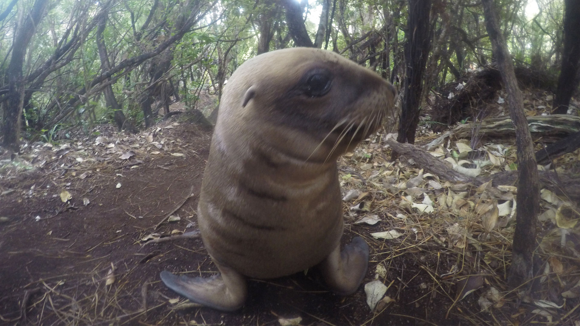 https://rfacdn.nz/zoo/assets/media/sea-lion-conservation-gallery-4.jpg