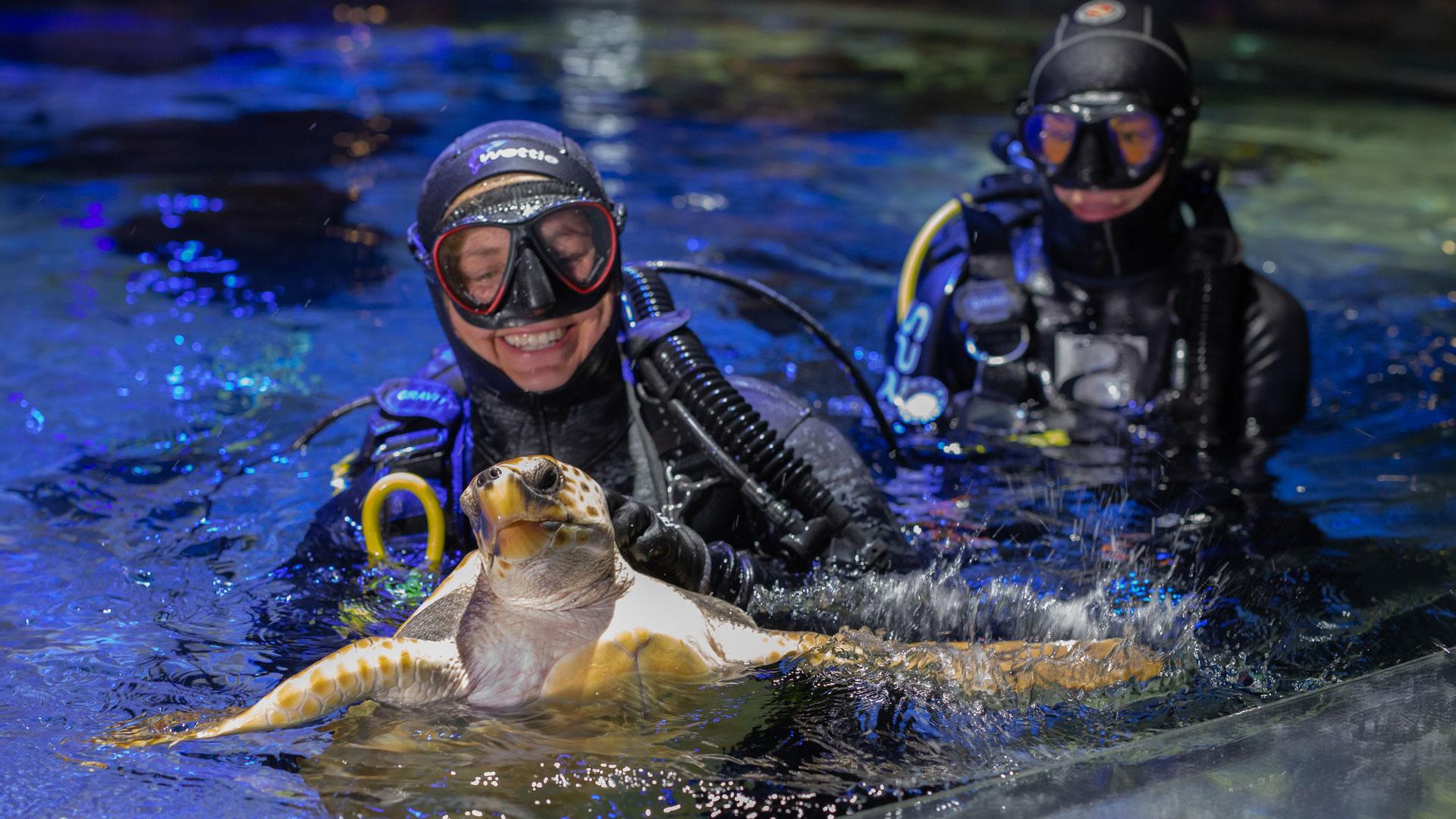 https://rfacdn.nz/zoo/assets/media/sea-turtle-kelly-tarltons-gallery-1.jpg