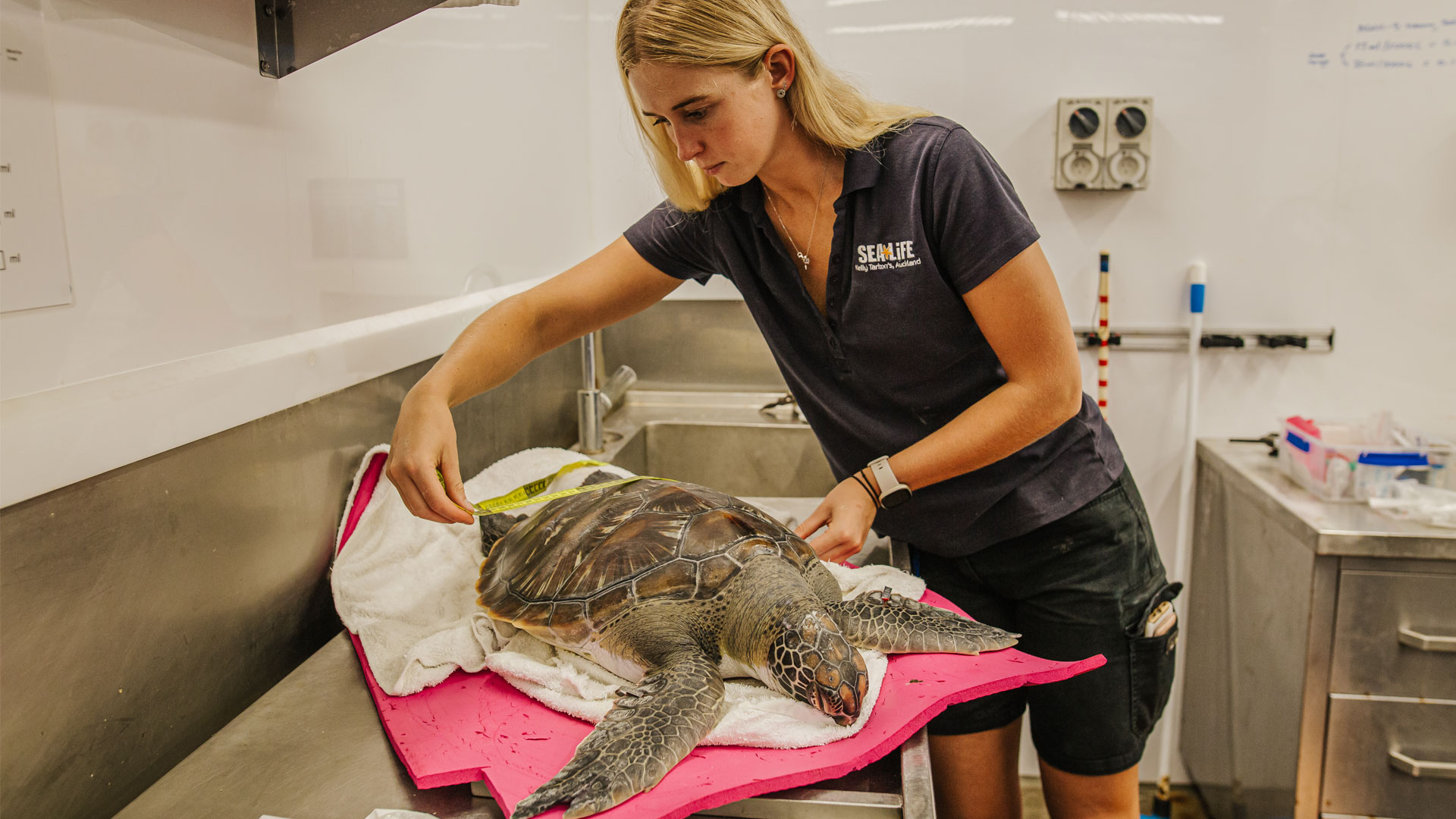 https://rfacdn.nz/zoo/assets/media/sea-turtle-kelly-tarltons-gallery-8.jpg