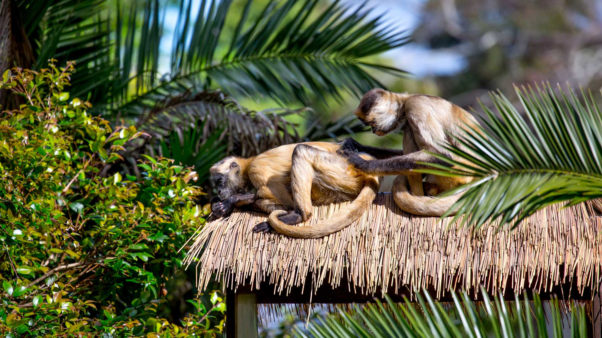 https://rfacdn.nz/zoo/assets/media/spider-monkey-gallery-4.jpg