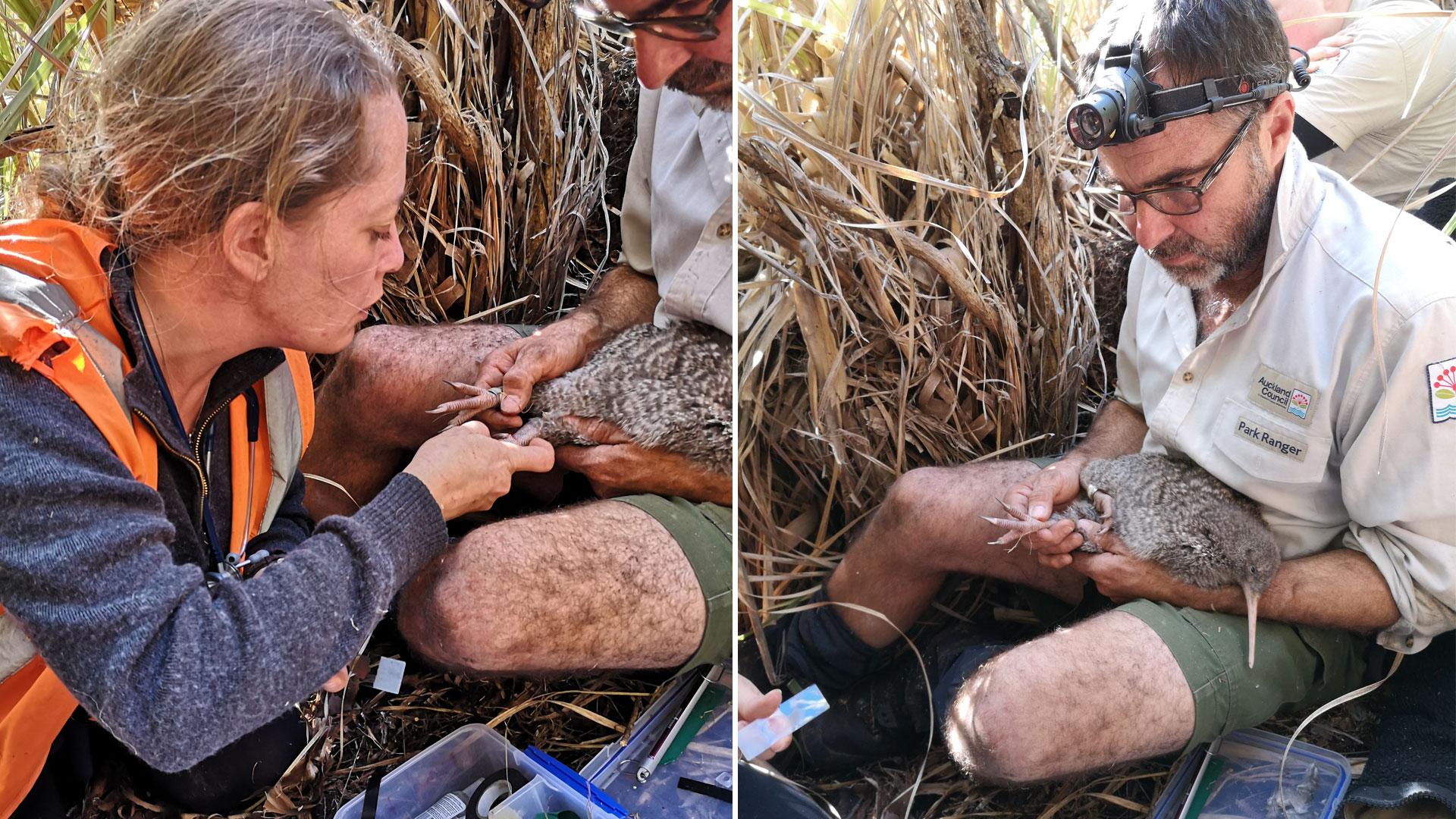 https://rfacdn.nz/zoo/assets/media/spotted-kiwi-vet-check-celine-gallery-3.jpg