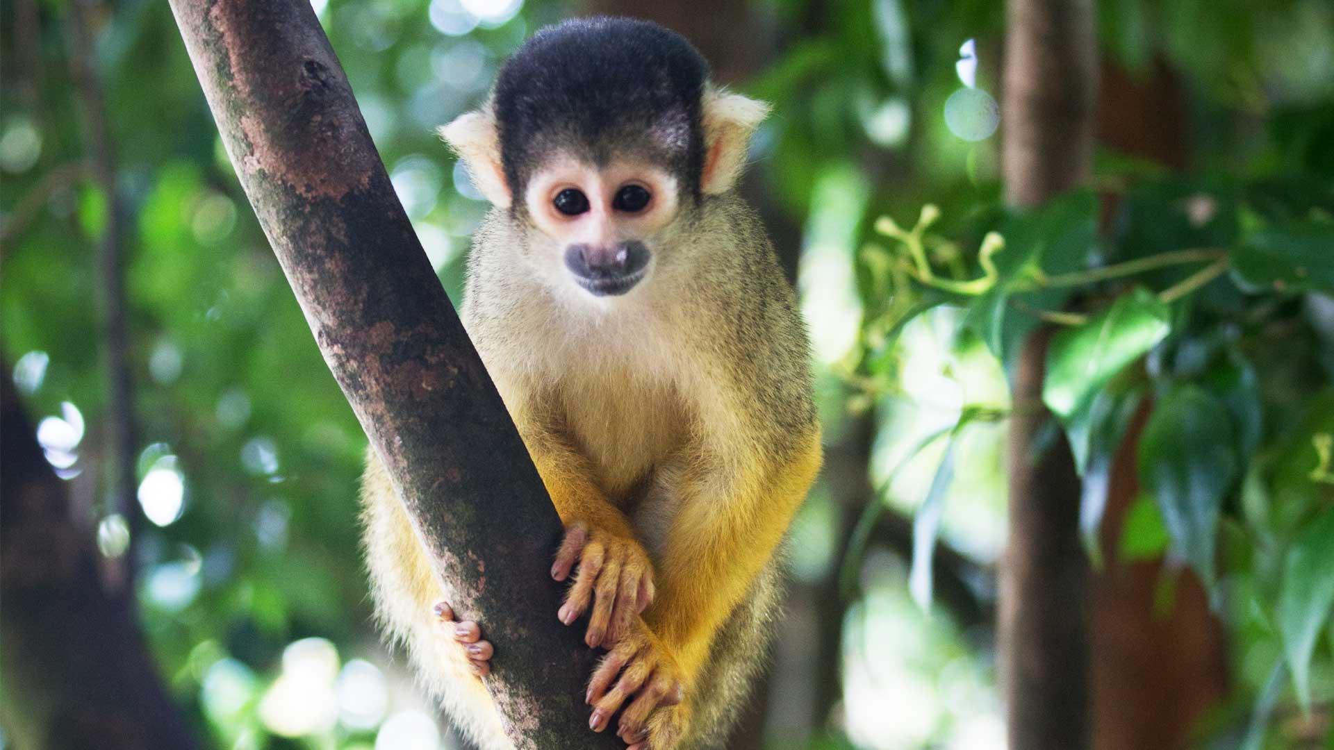 https://rfacdn.nz/zoo/assets/media/squirrel-monkey-gallery-1.jpg