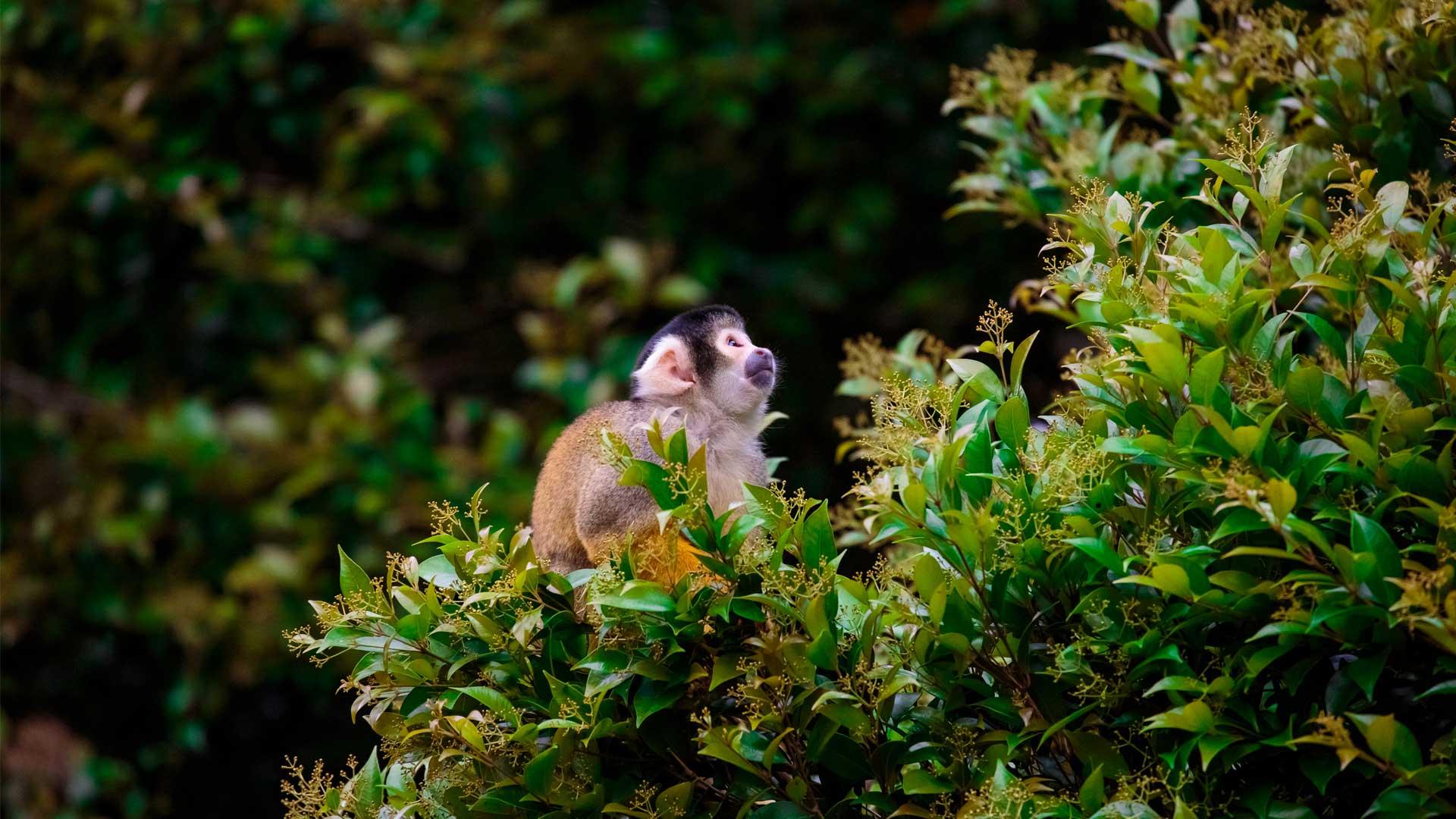 https://rfacdn.nz/zoo/assets/media/squirrel-monkey-gallery-4.jpg