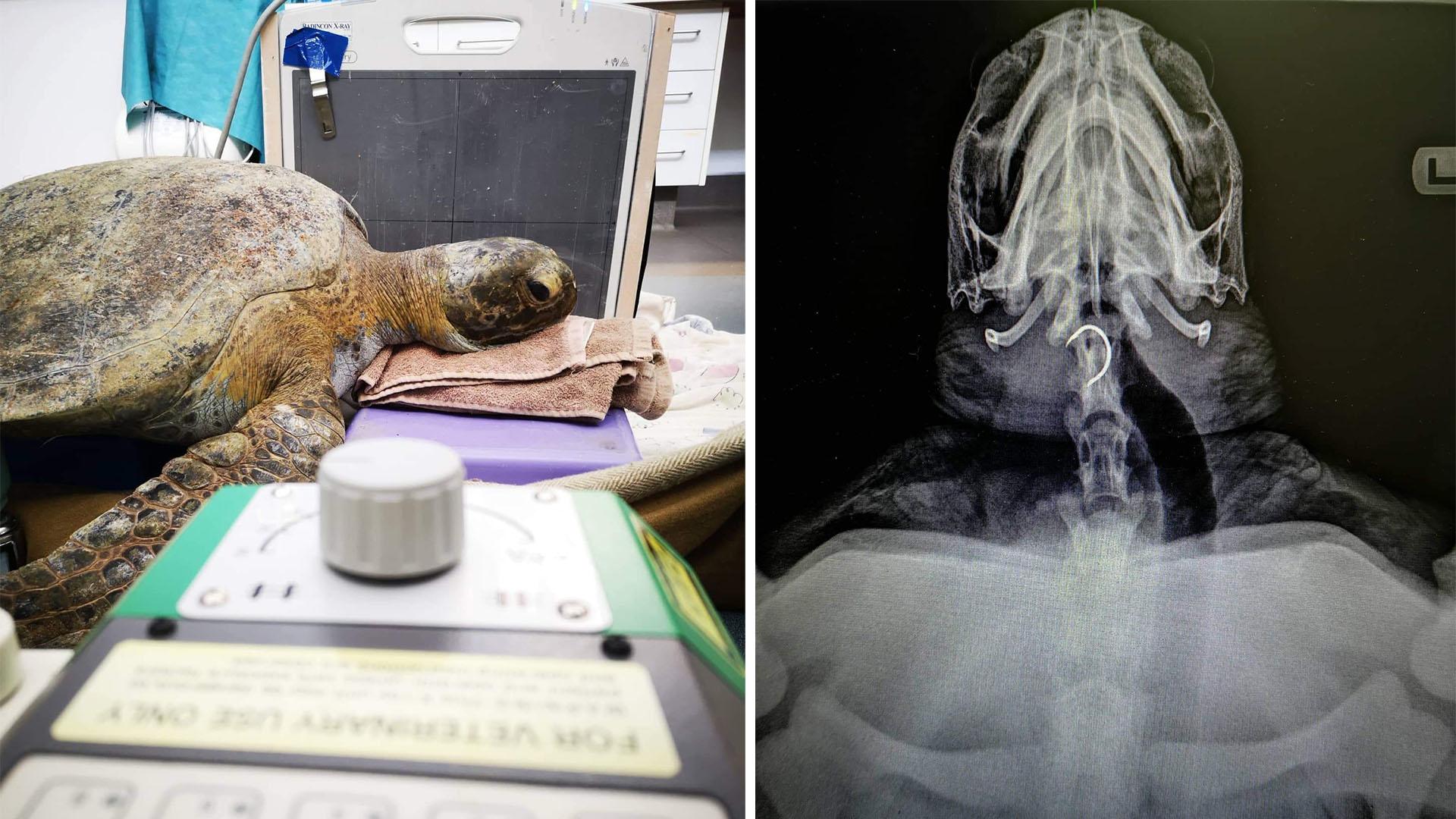 https://rfacdn.nz/zoo/assets/media/turtle-double-image-gallery.jpg