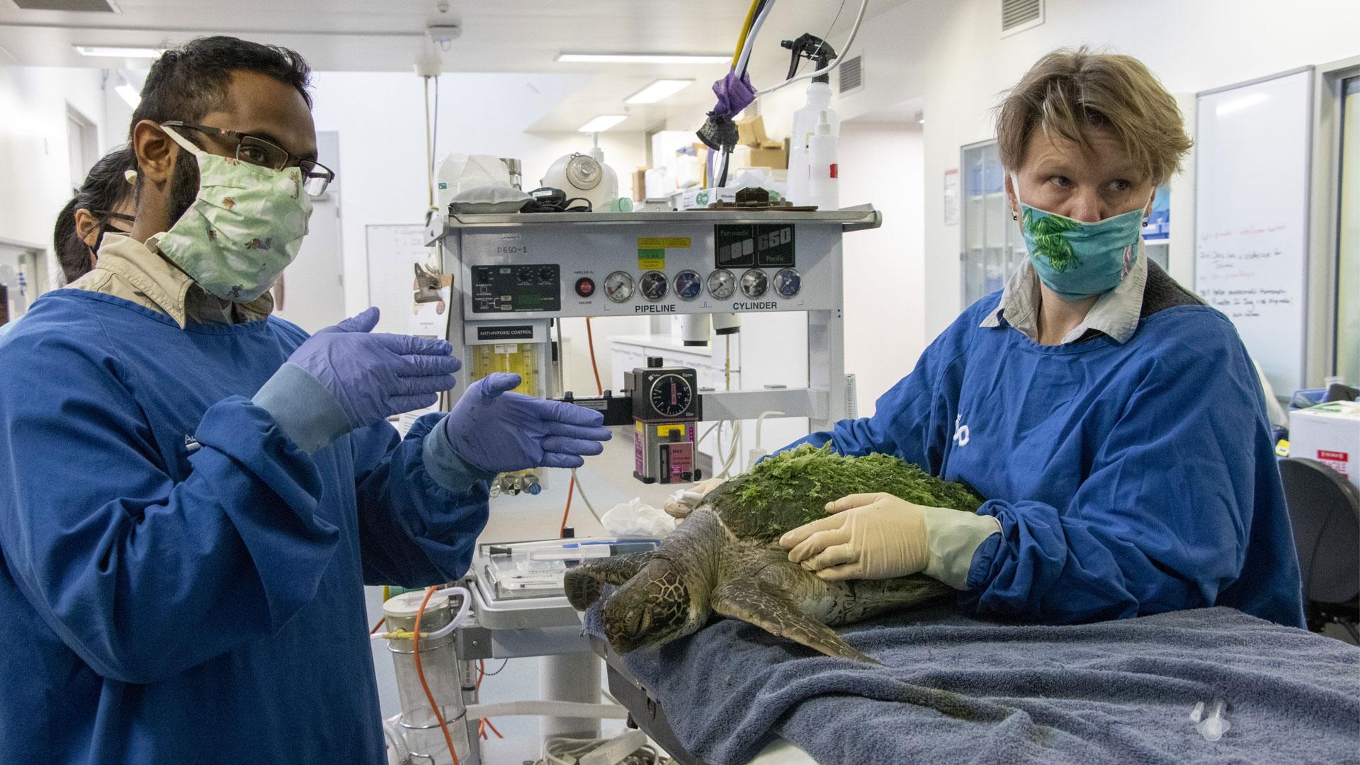 https://rfacdn.nz/zoo/assets/media/vet-hospital-turtle-stefan-gallery-1.jpg