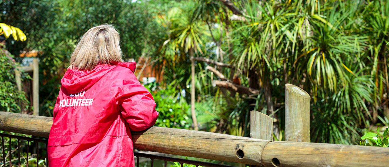 Become An Auckland Zoo Volunteer Auckland Zoo